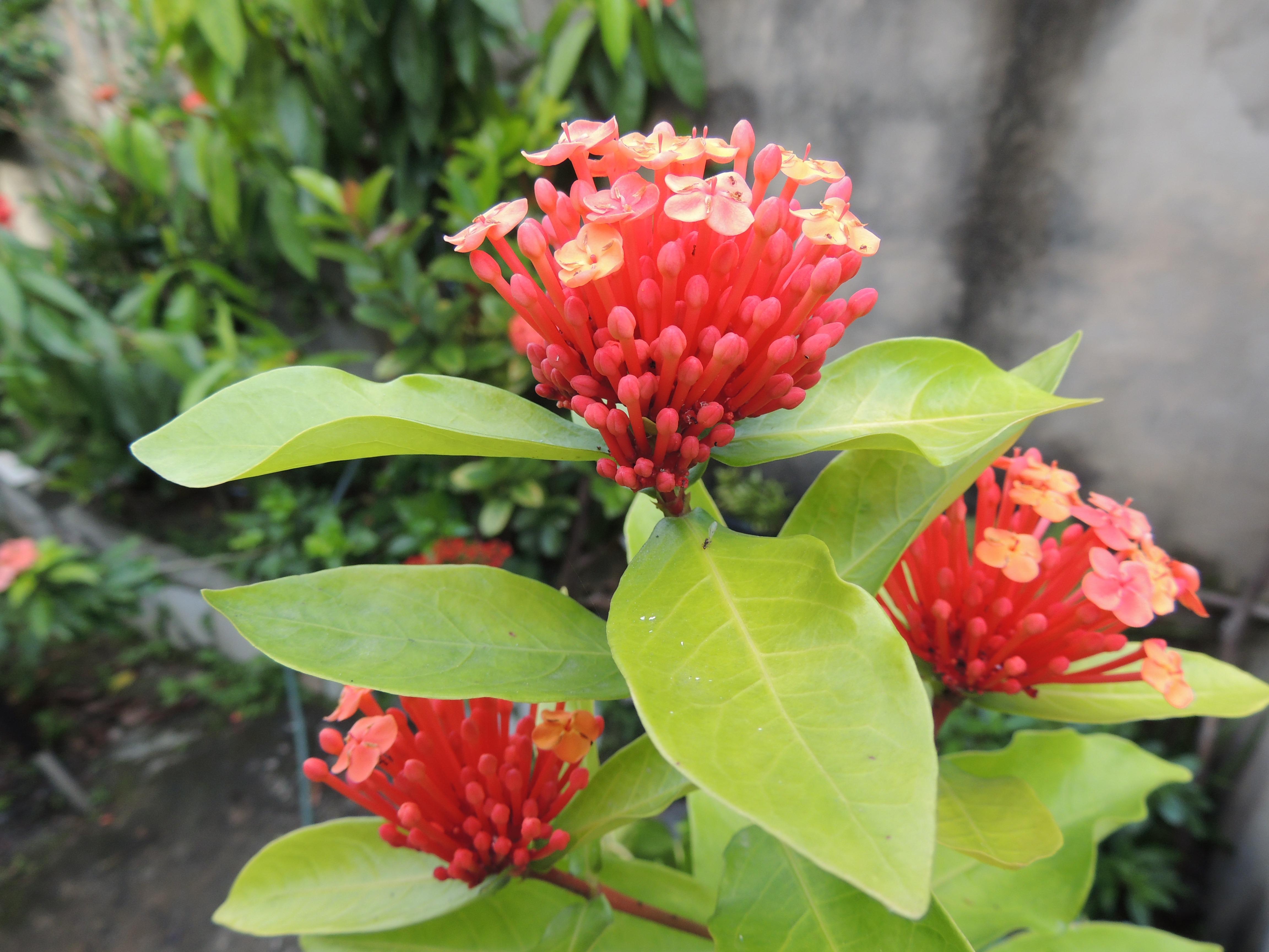 Images gratuites plante fleur vert jardin flore - Plantas de sol directo para jardin ...