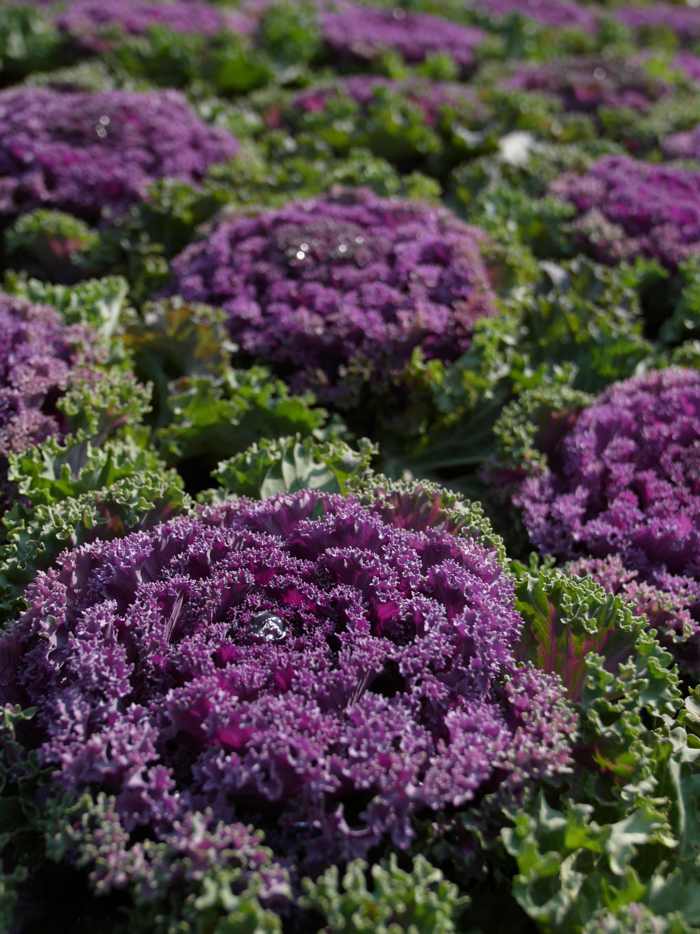 Images Gratuites Fleur Herbe Jardin Des Legumes Plante A