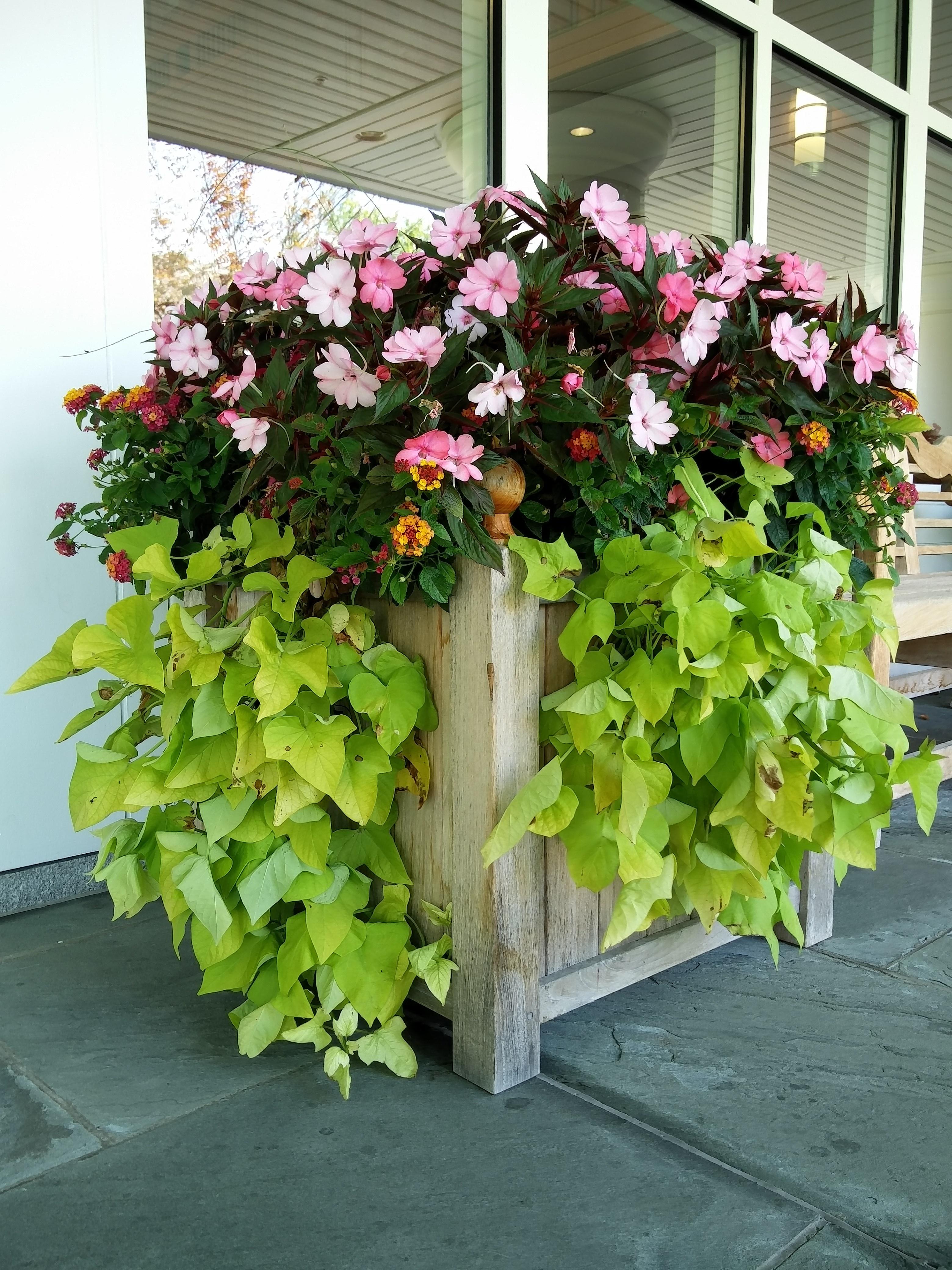 pot arbuste pot pour arbuste arbuste en pot pour terrasse. Black Bedroom Furniture Sets. Home Design Ideas