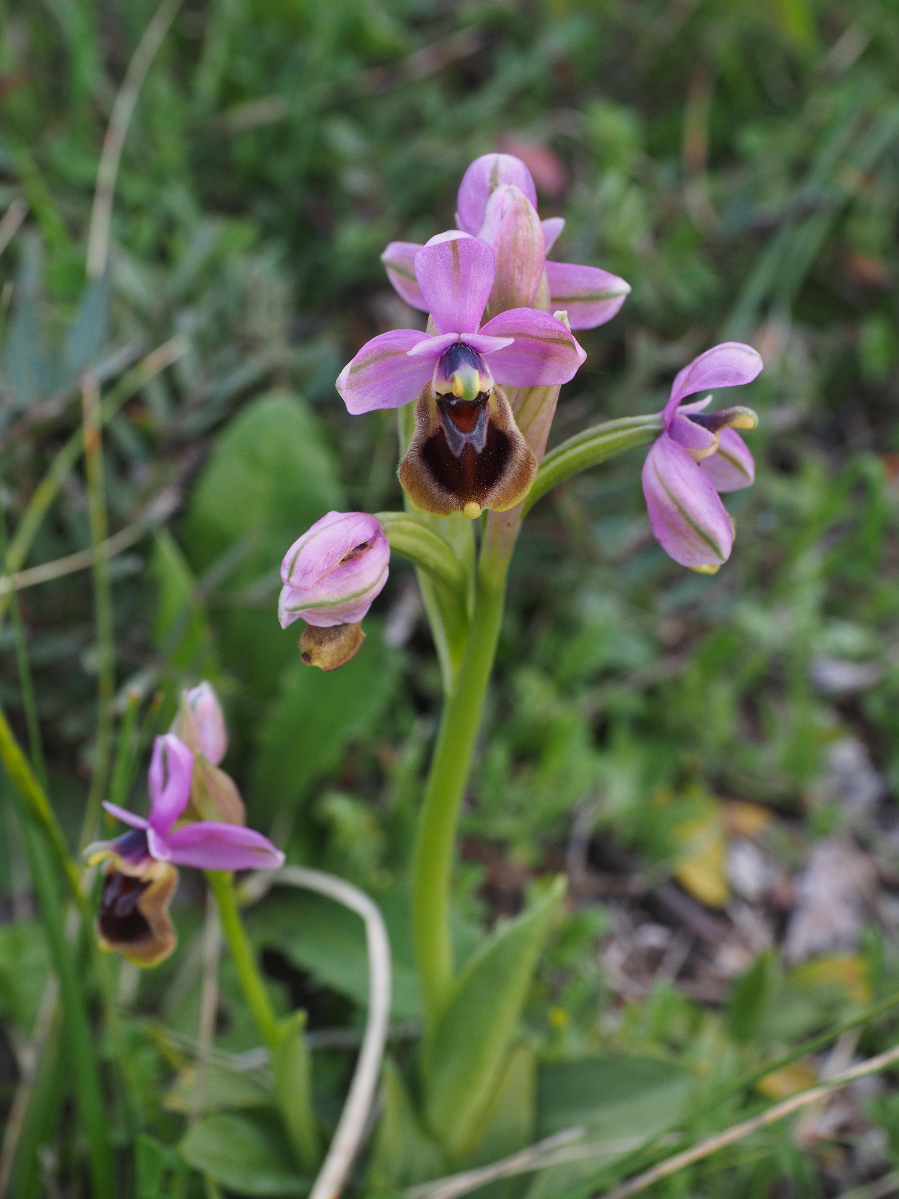 Images Gratuites Fleur Insecte Botanique Flore Tentation