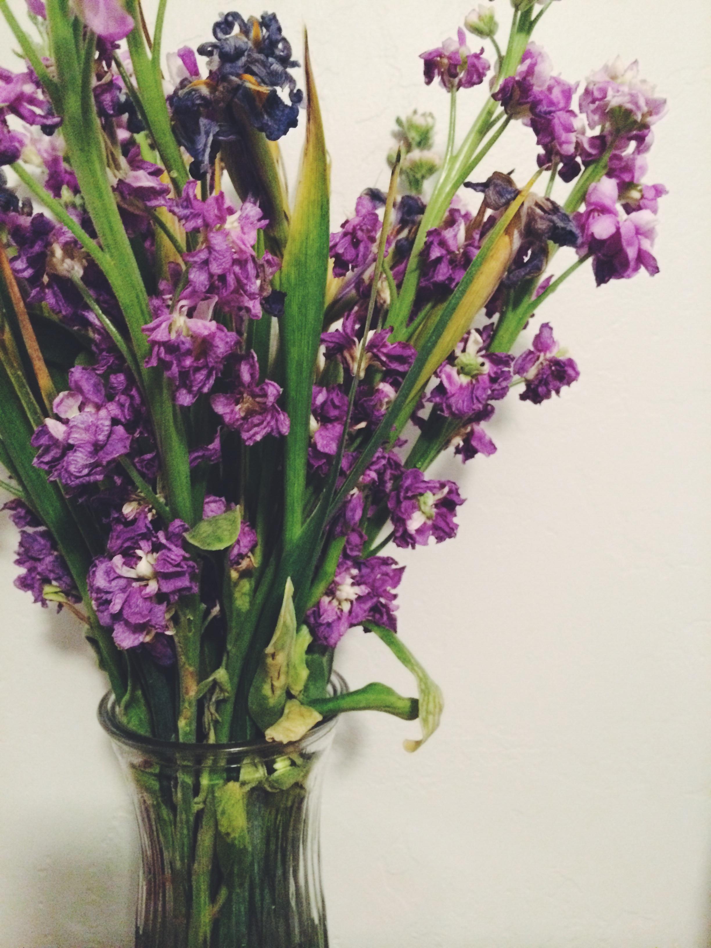 Fotos Gratis Flor Lavanda Orquídea Floristería