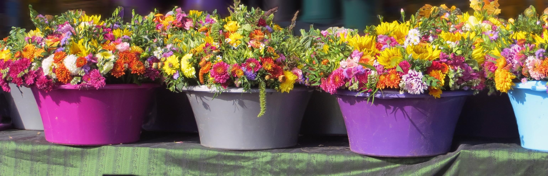 Banco De Imagens Plantar Flor Refeicao Outono Colorida