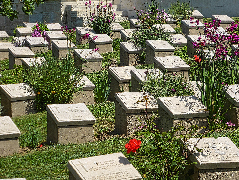 images gratuites plante militaire botanique historique cimeti re jardin mort flore. Black Bedroom Furniture Sets. Home Design Ideas