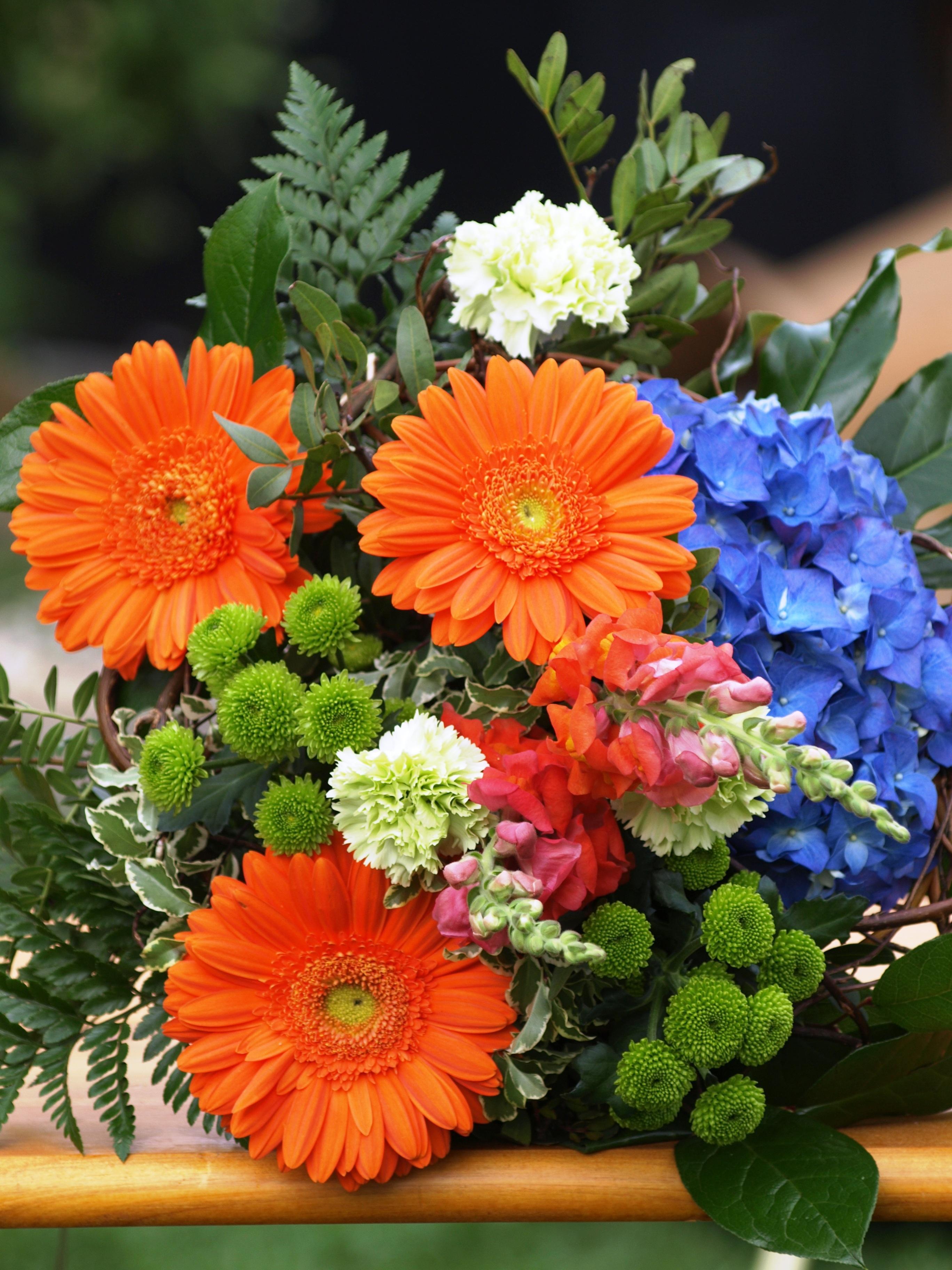 Fotos Gratis Flor Naranja Verde Color Azul Vistoso