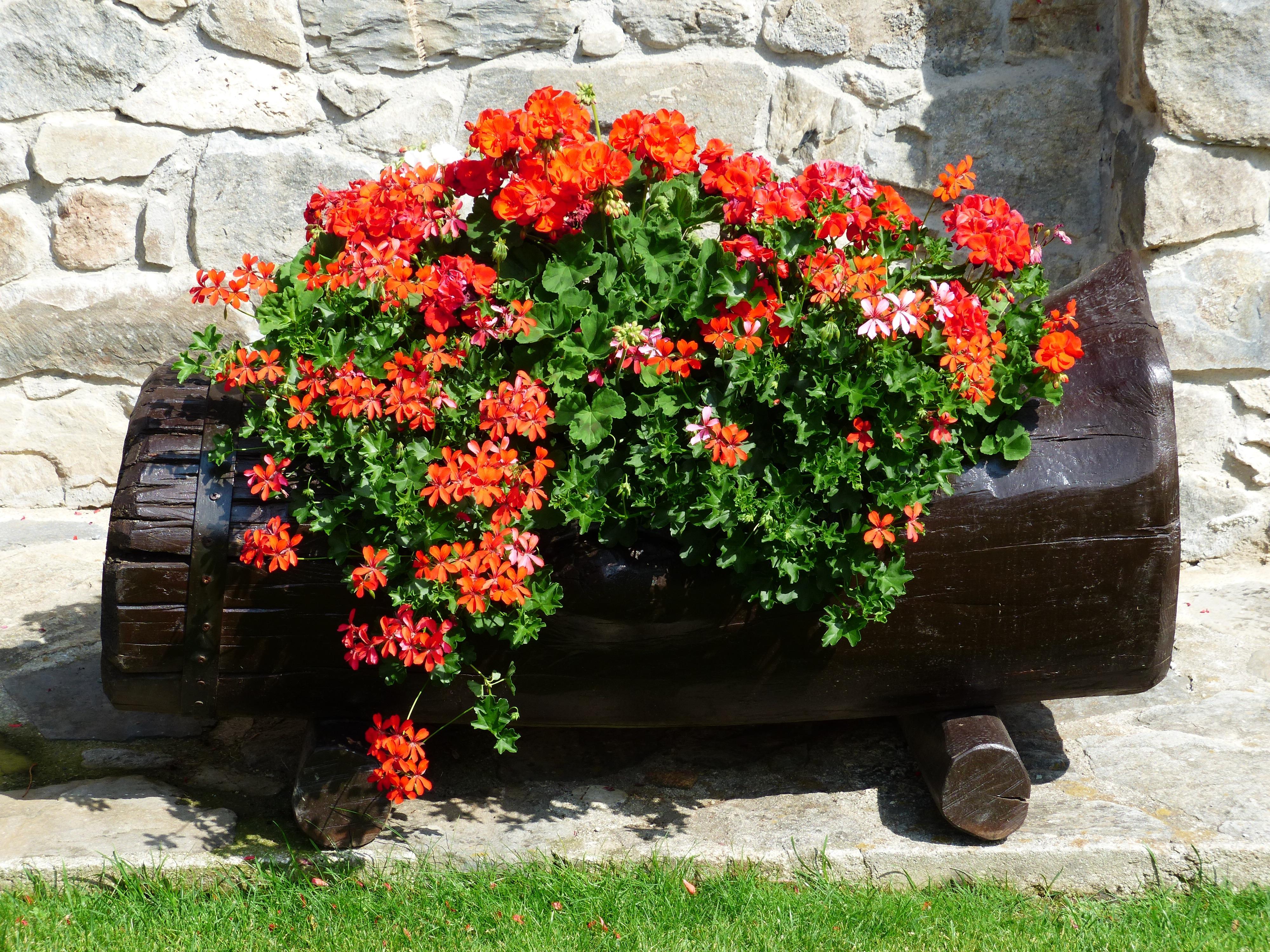 Fotos gratis flor naranja rojo color vistoso jard n for Arbol rojo jardin