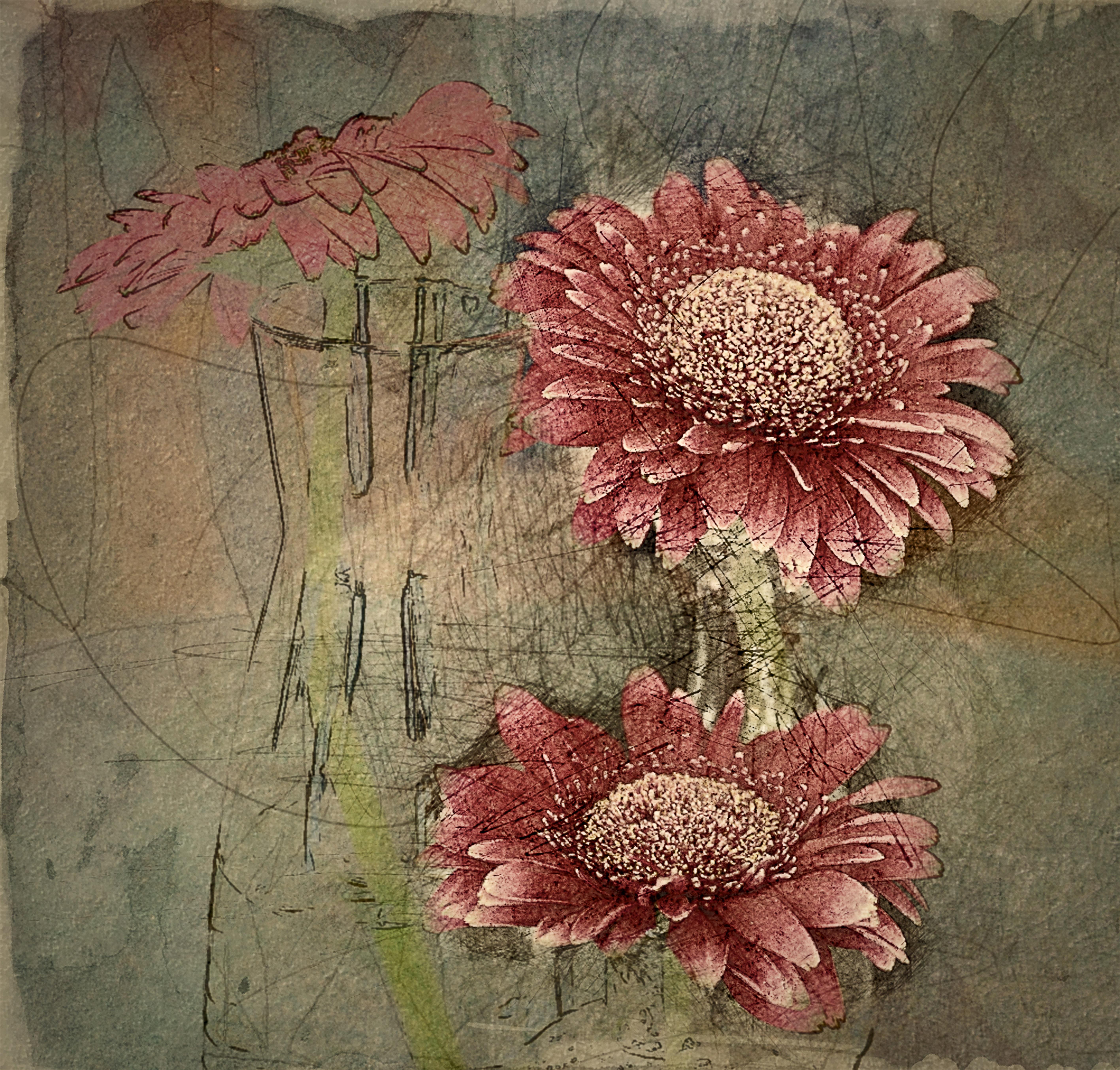 Images Gratuites Fleur Modèle Rouge Botanique Rose