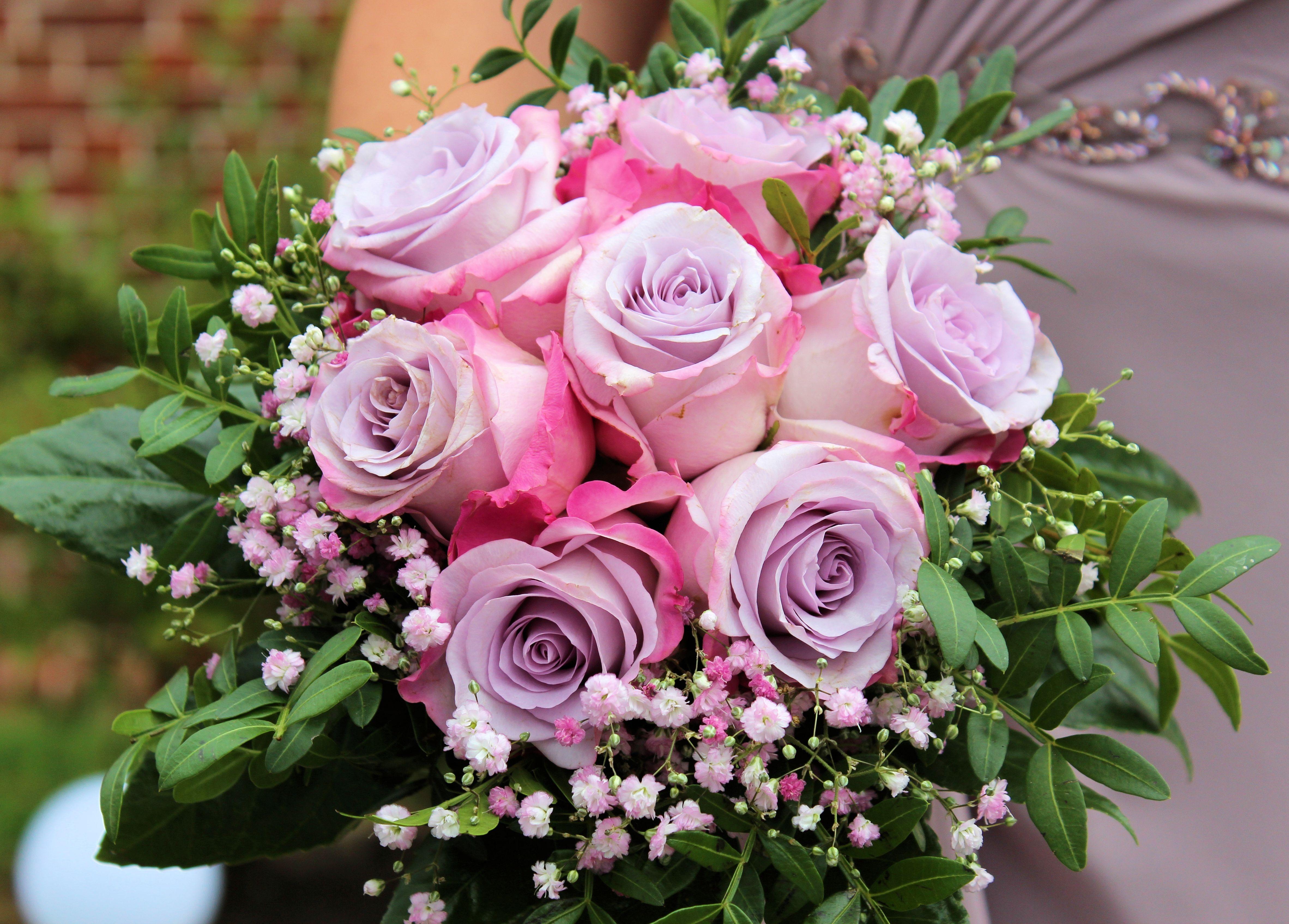 Gratis afbeeldingen fabriek bloem bloemblad bloeien