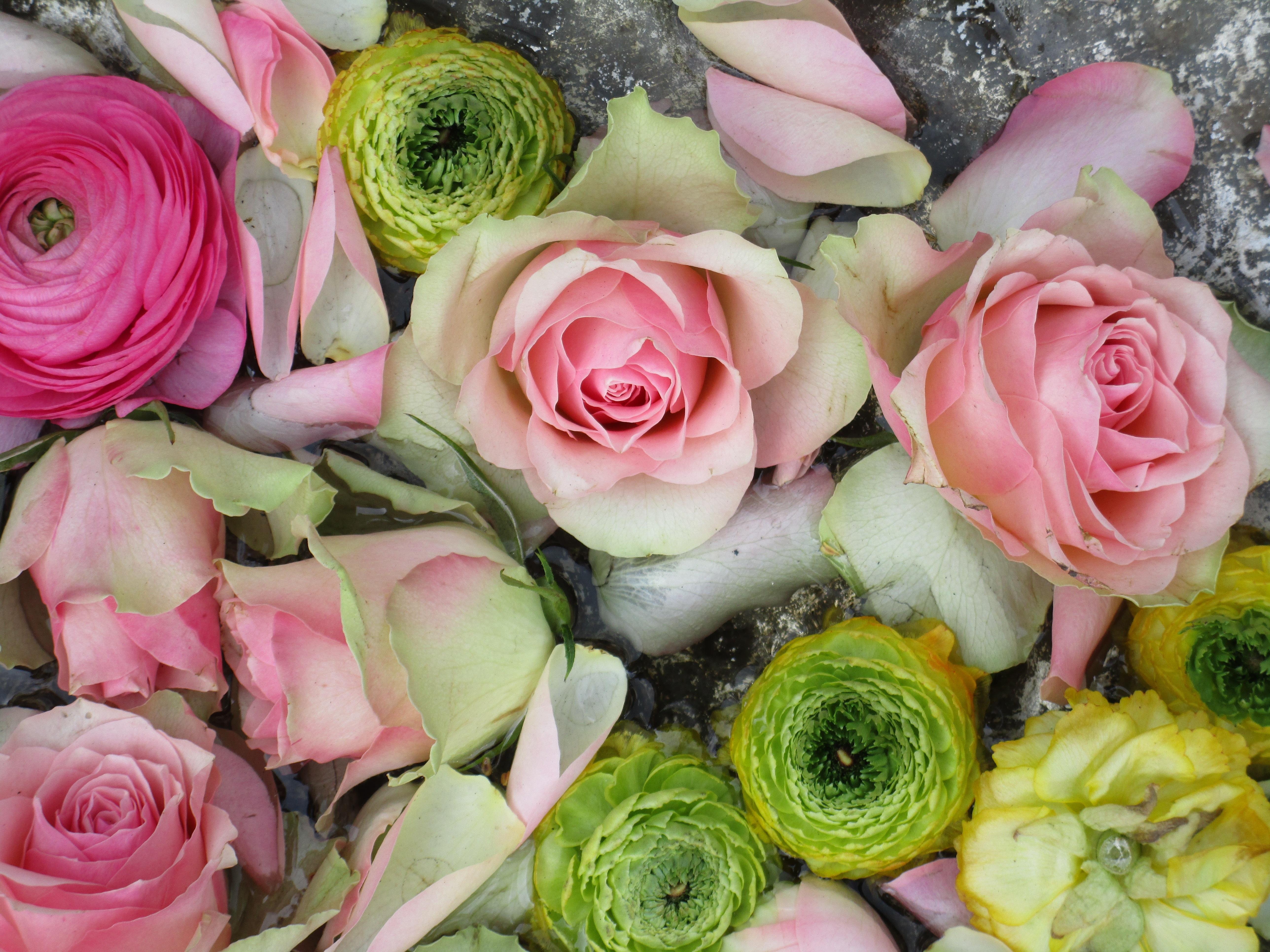 Bekend Gratis Afbeeldingen : fabriek, bloem, bloemblad, bloeien, bloemen &GE88