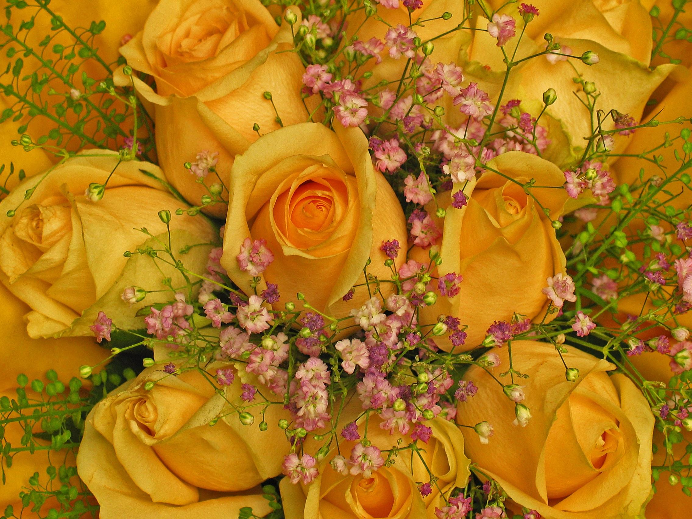 С днём флориста поздравления