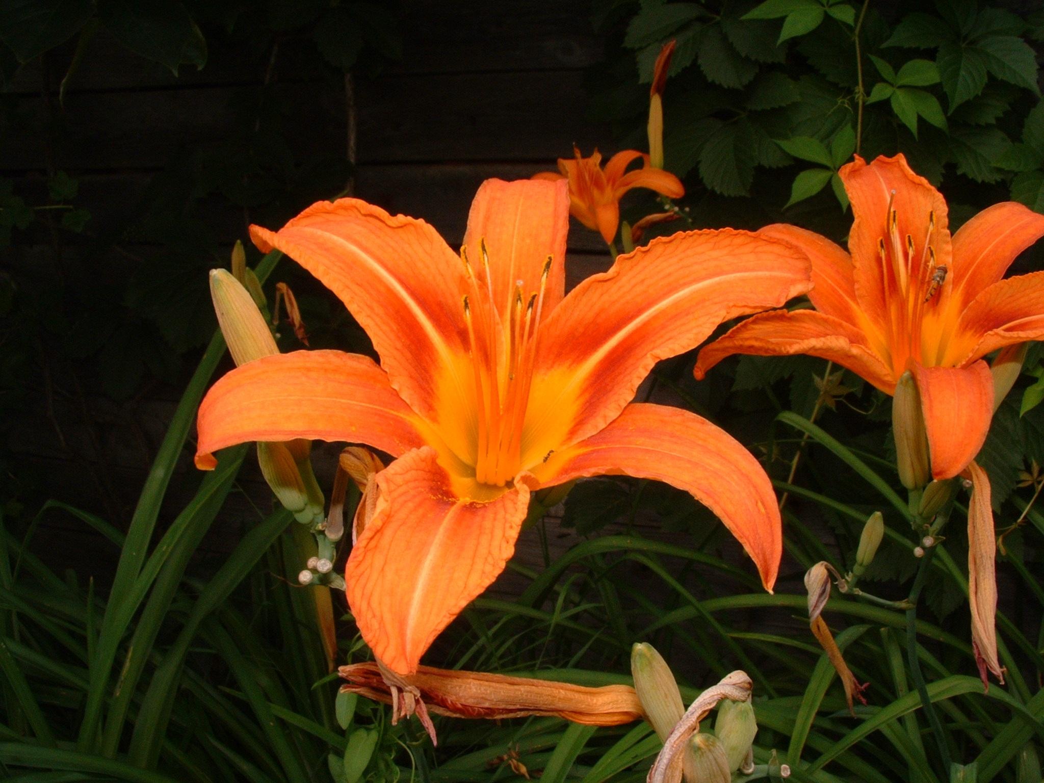 Kostenlose Foto Blume Blutenblatt Bluhen Fruhling Botanik