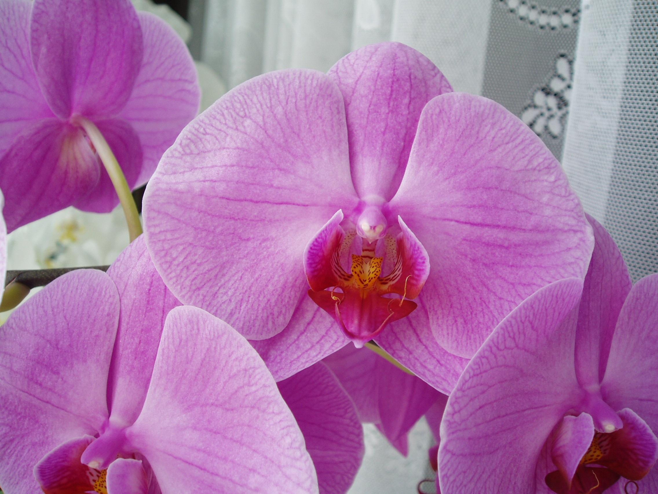 киеве фото всех цветов орхидеи красная крыша