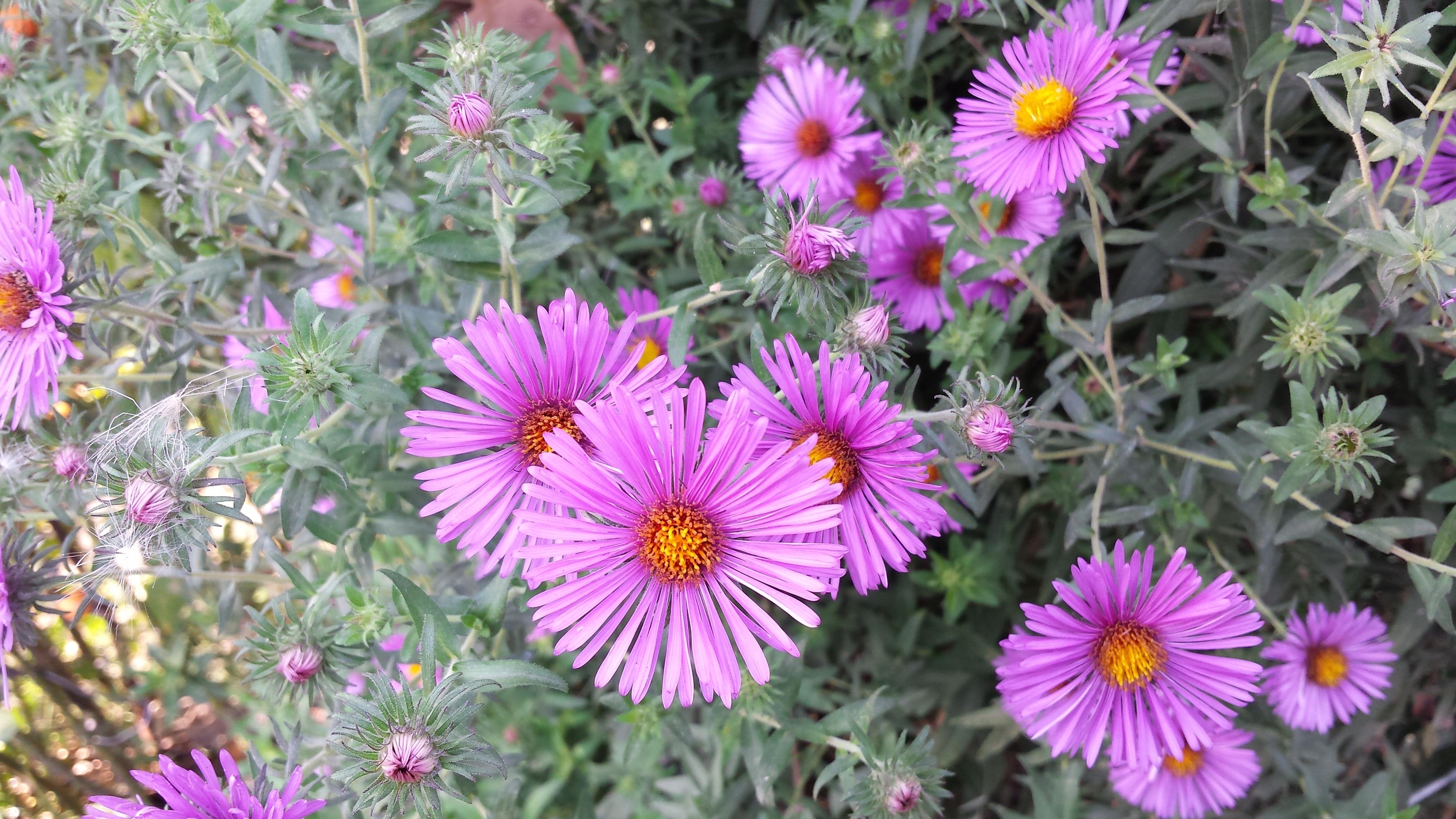 Images Gratuites : fleur, pétale, bouquet, l\'automne, botanique ...