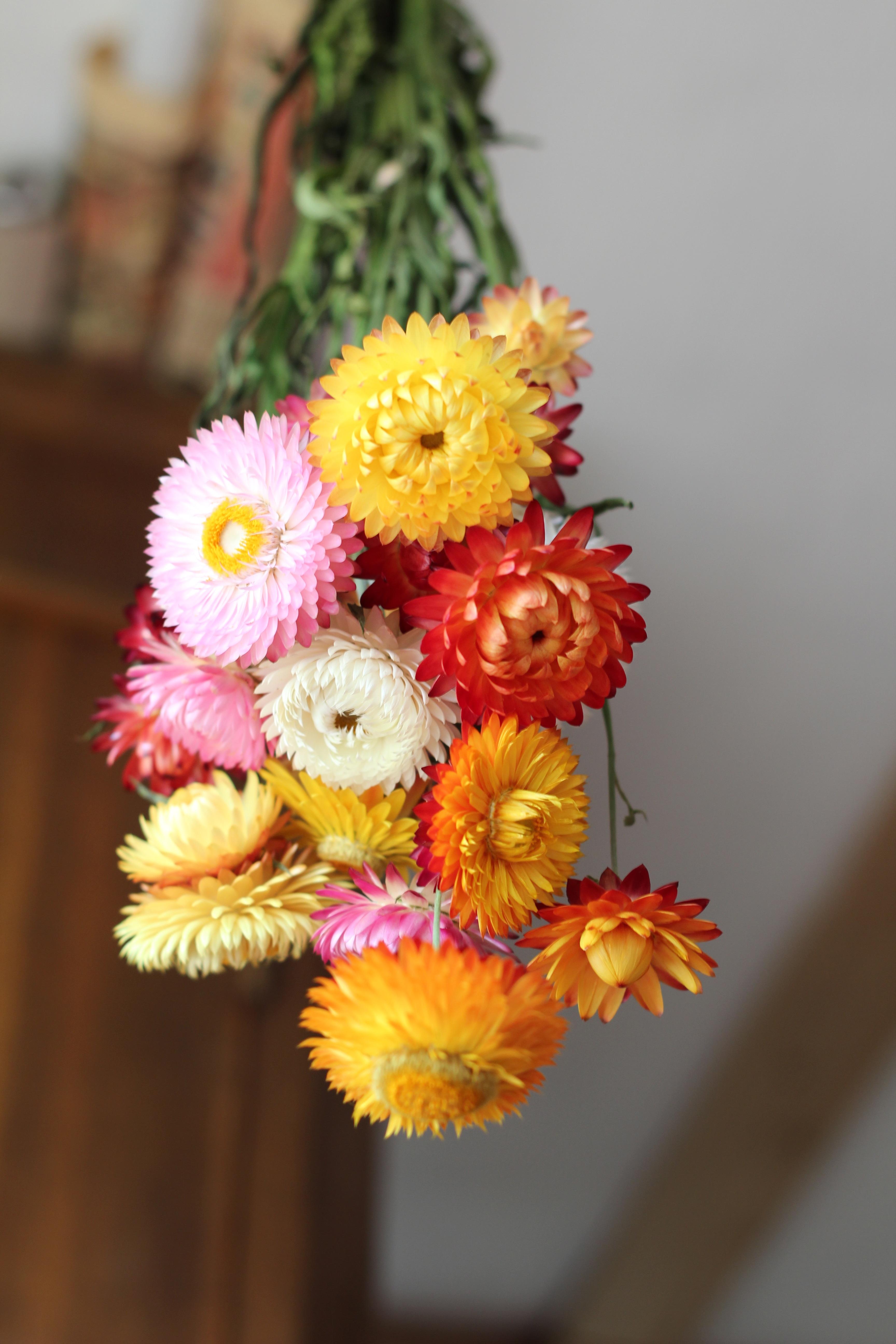 Welche Blumen Blühen Im September kostenlose foto blume blütenblatt strauß herbst gelb rosa