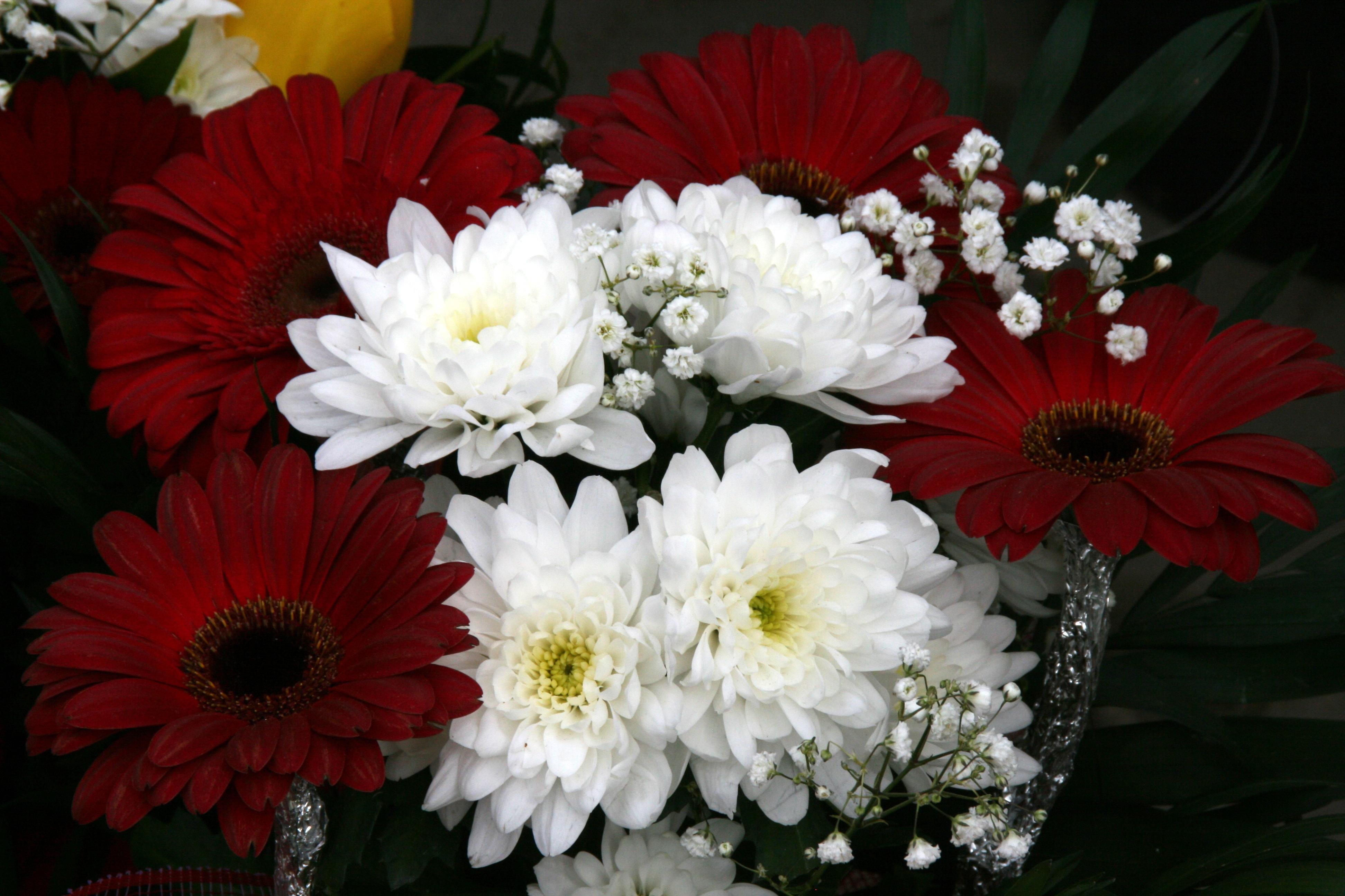 Fotoğraf çiçek Taçyaprağı Buket çiçekler Boyama Gerbera