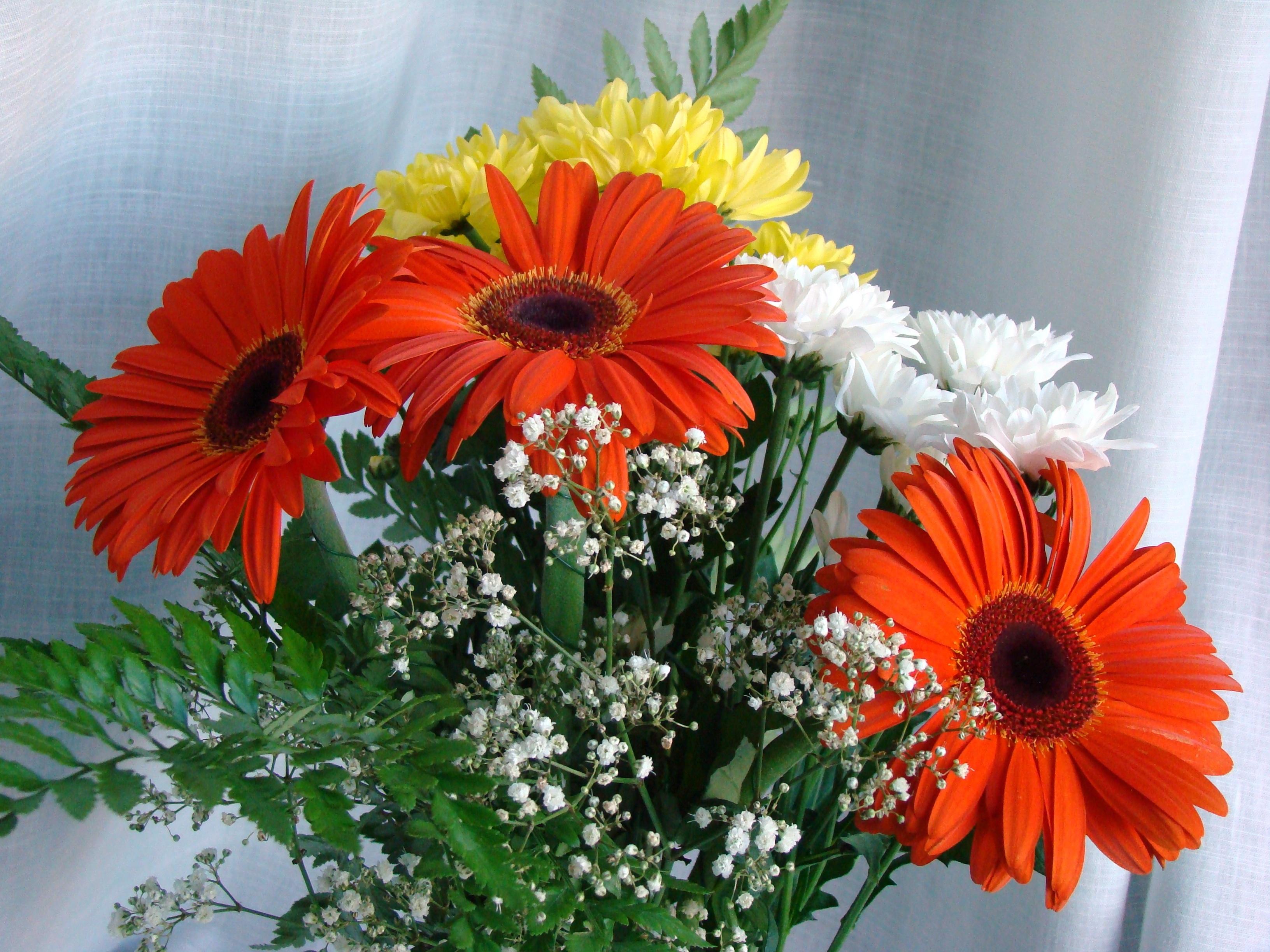 нашу богатую фото цветы герберы с днем рождения еще