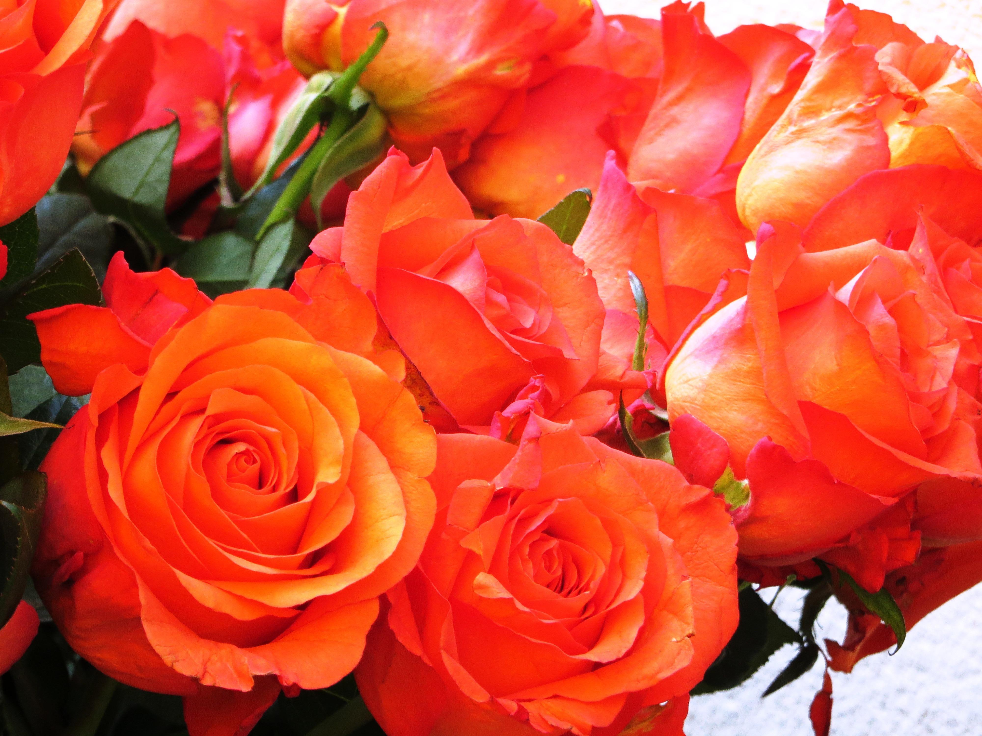 как оригинально картинки с оранжевыми розами тоже
