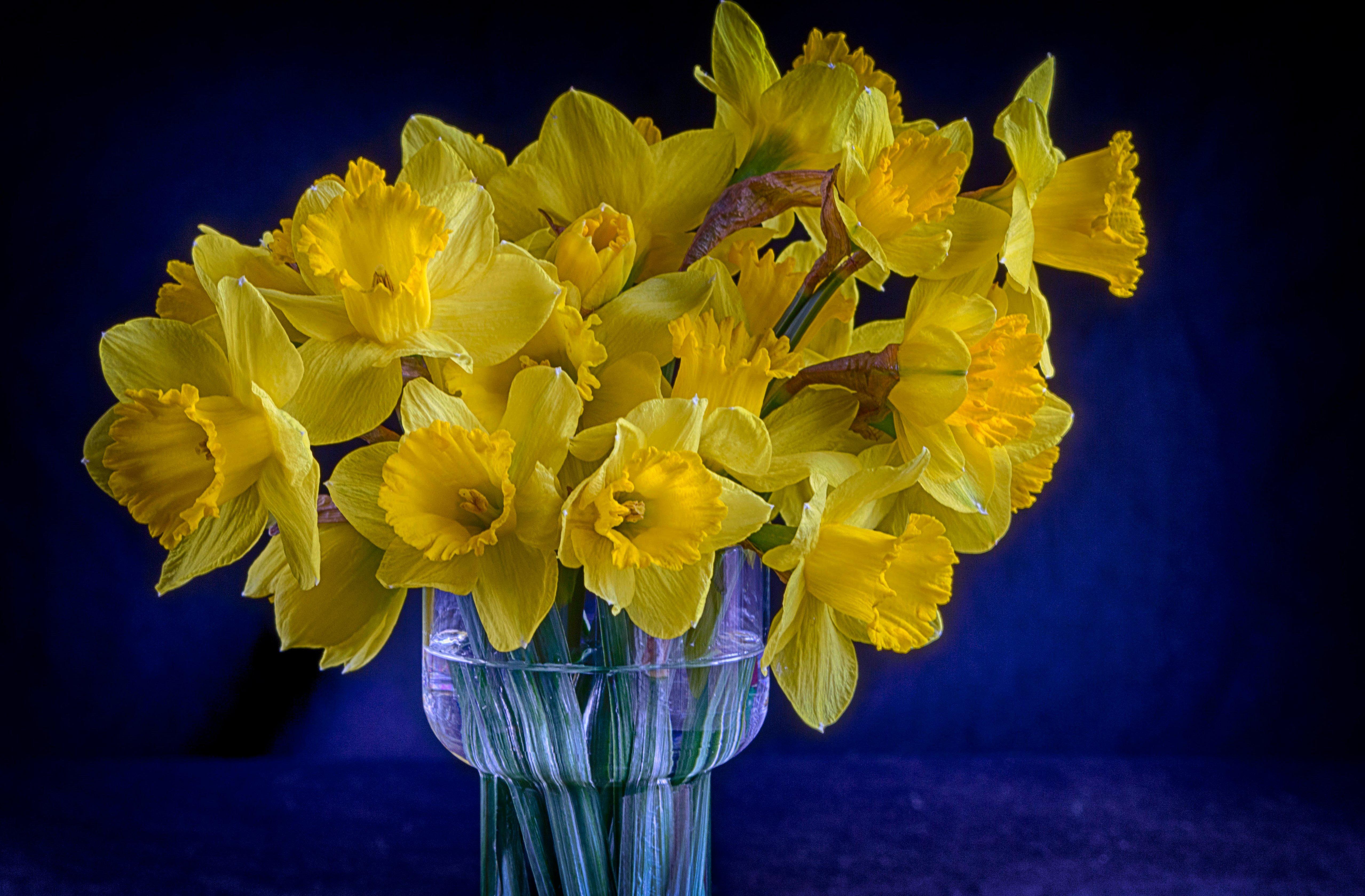 Images Gratuites Fleur Petale Vase Jaune Flore Jonquilles