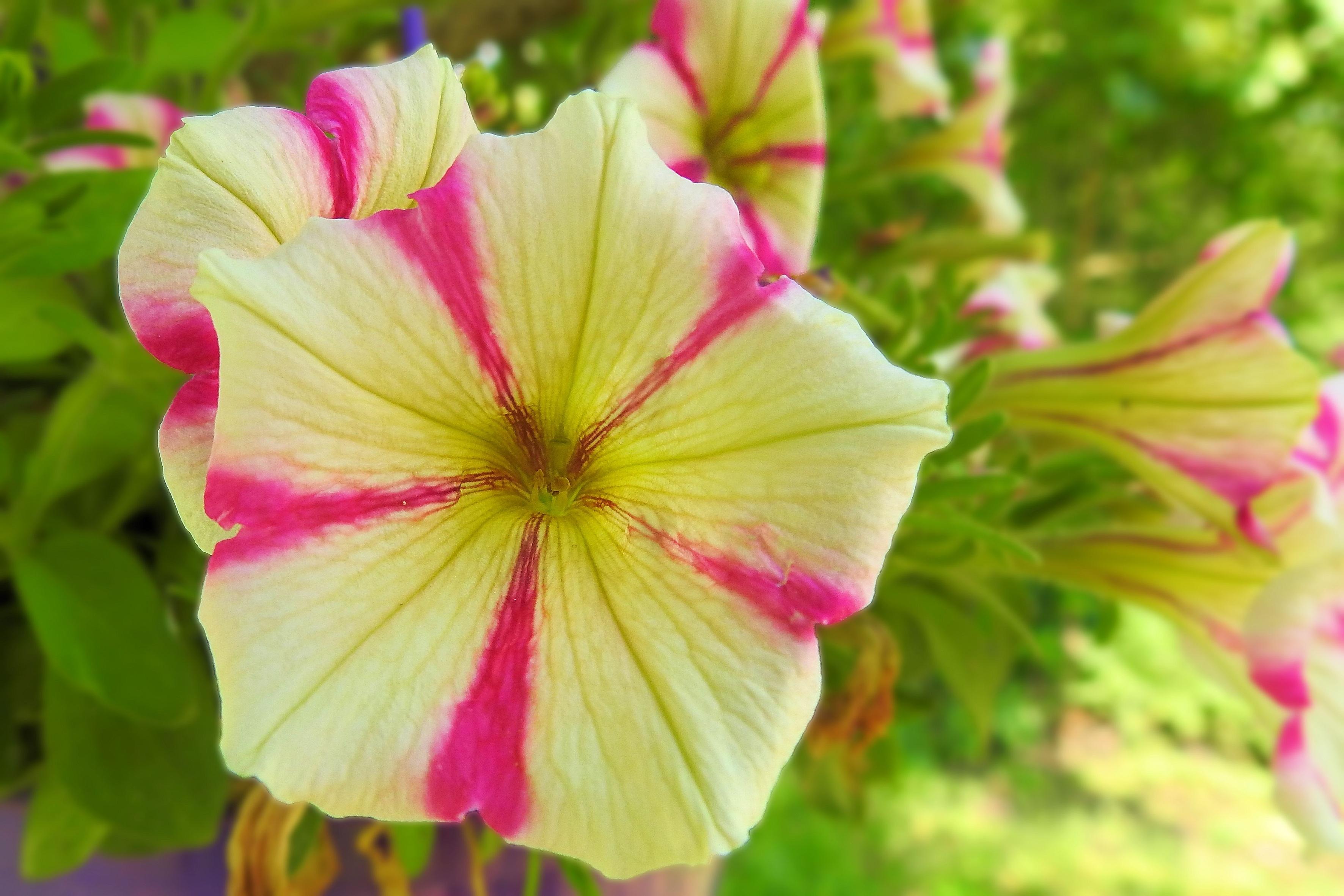 Free Images : flower, petal, color, botany, colorful, flora ...