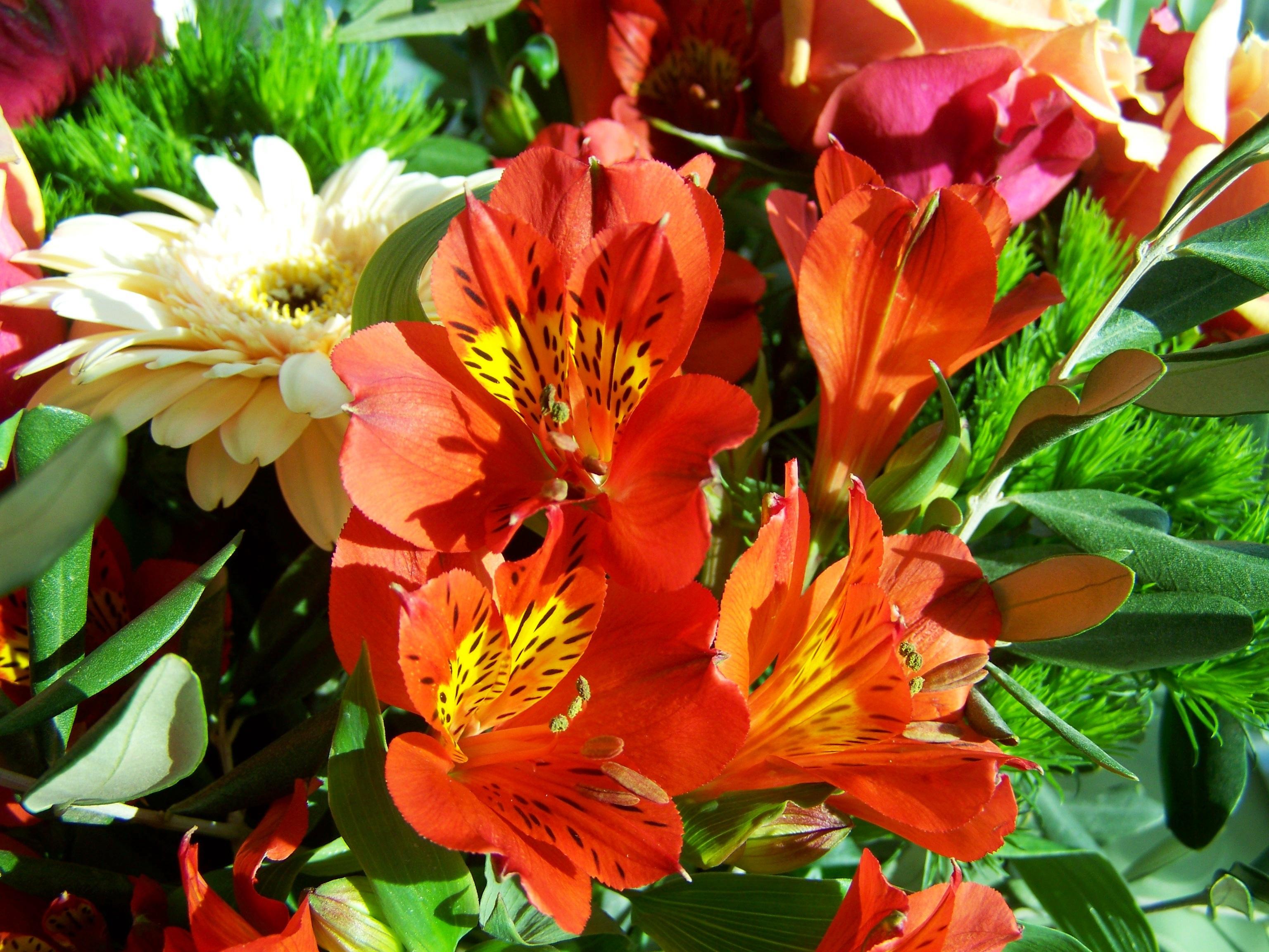 Free images petal color flora shrub cut flower floristry plant flower petal color flora shrub cut flower lily floristry bunch of flowers flowering plant flower izmirmasajfo