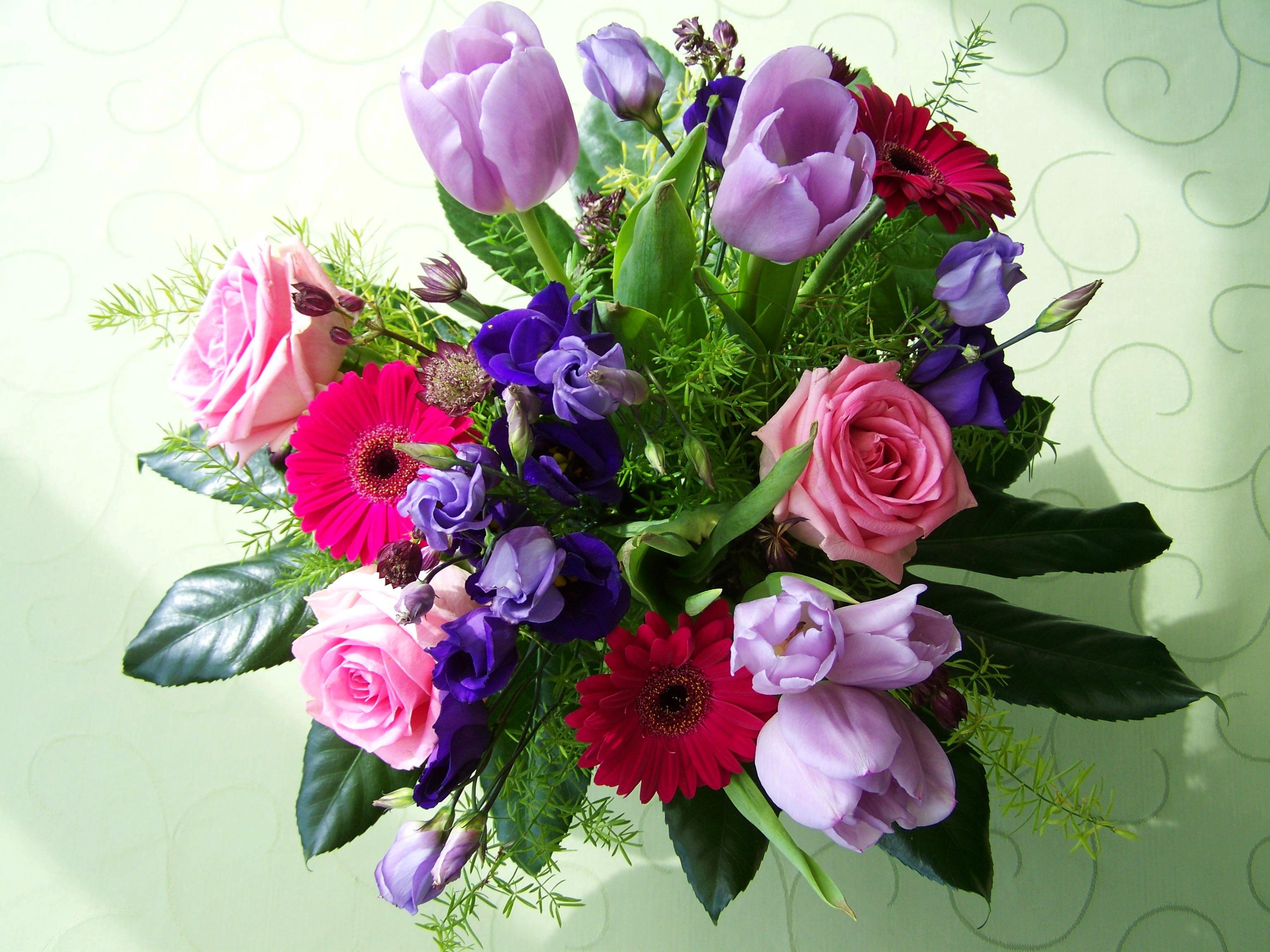 Fotos Gratis Pétalo Color Rosado Flora Flor De Corte