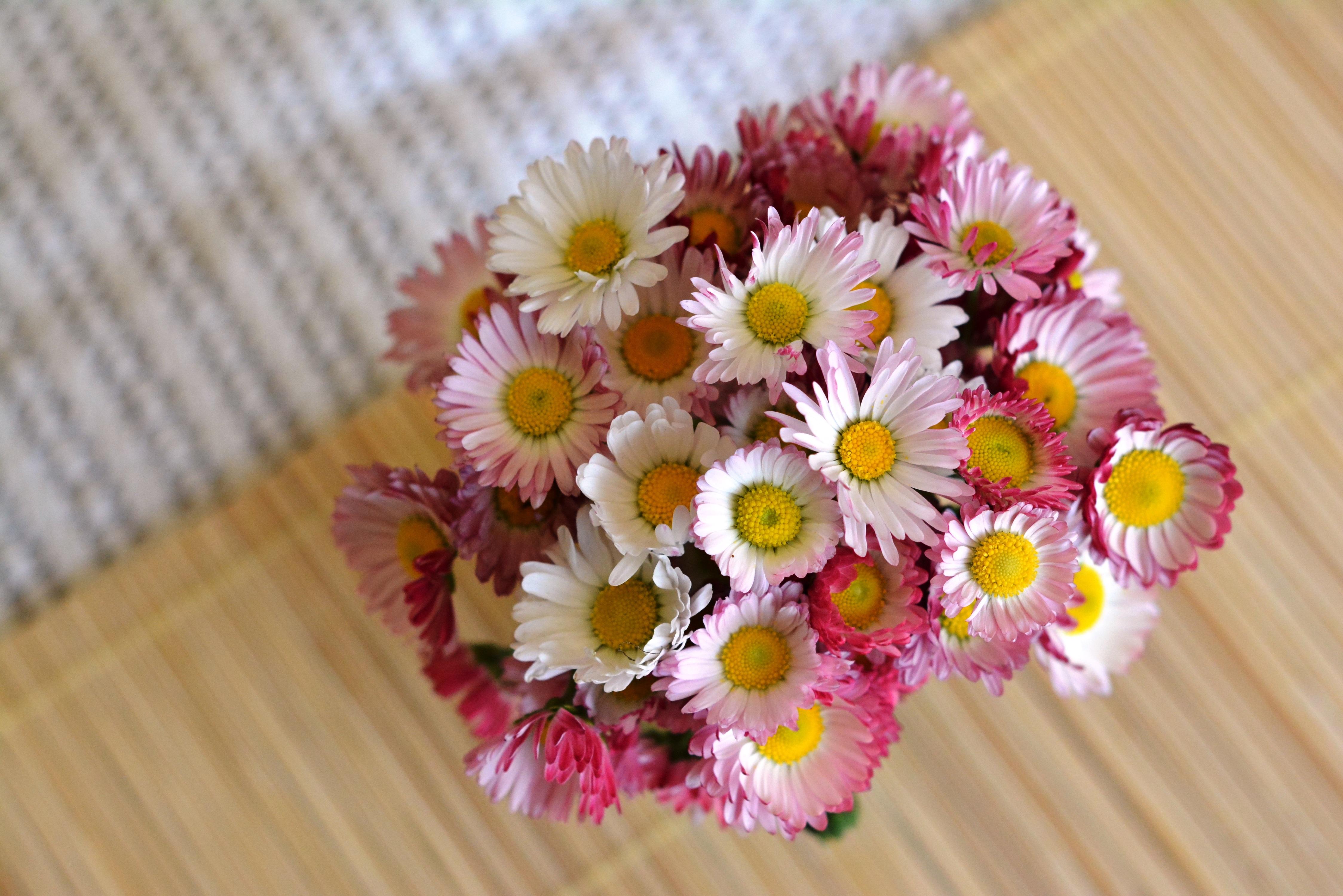 Images Gratuites Fleur P Tale Marguerite D Coration Jaune Rose Flore Marguerites