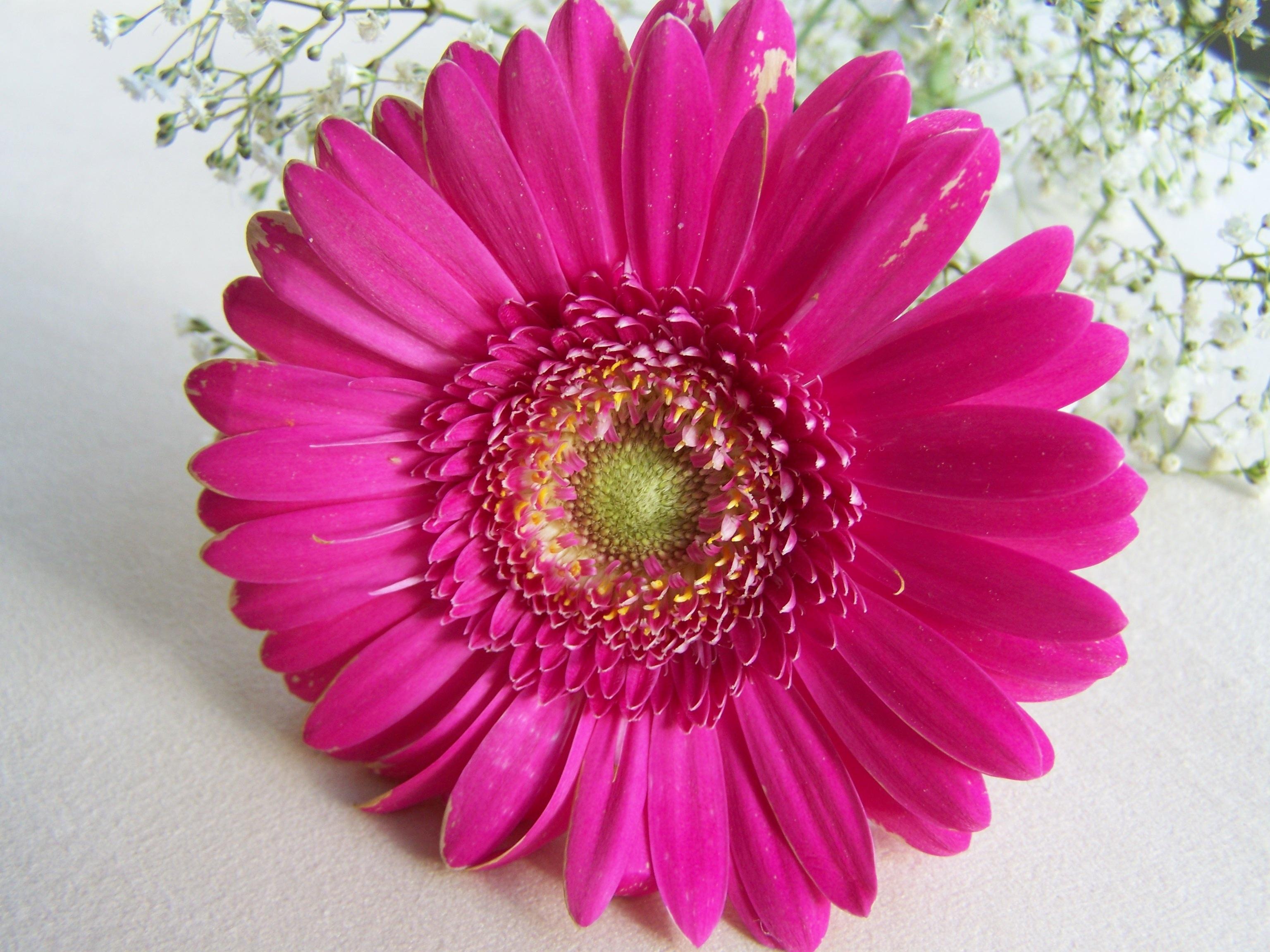 Banco de imagens plantar flor p tala rosa flor de - Cortar hierba alta ...