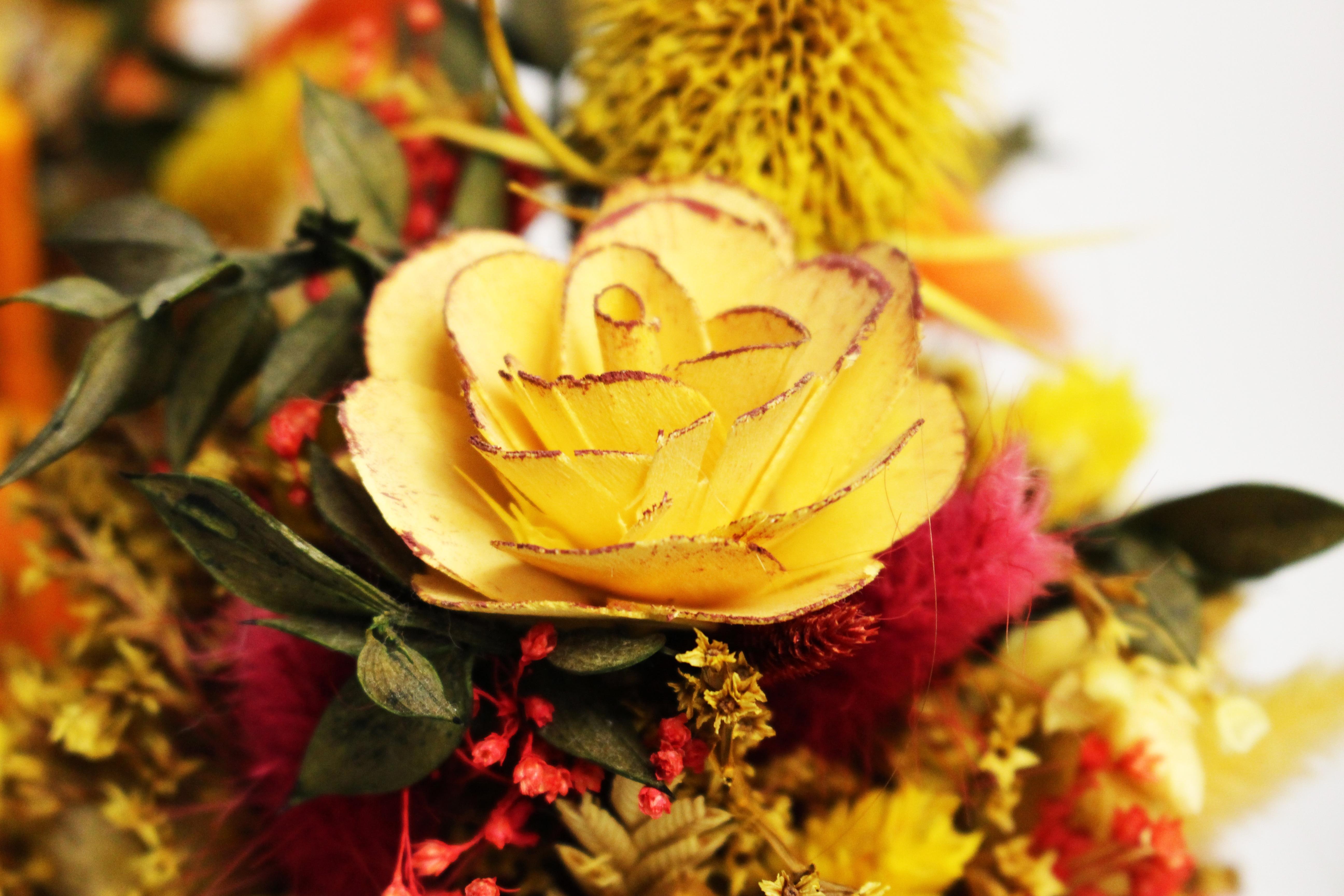 Images Gratuites  fleur, pétale, l\u0027automne, jaune, flore