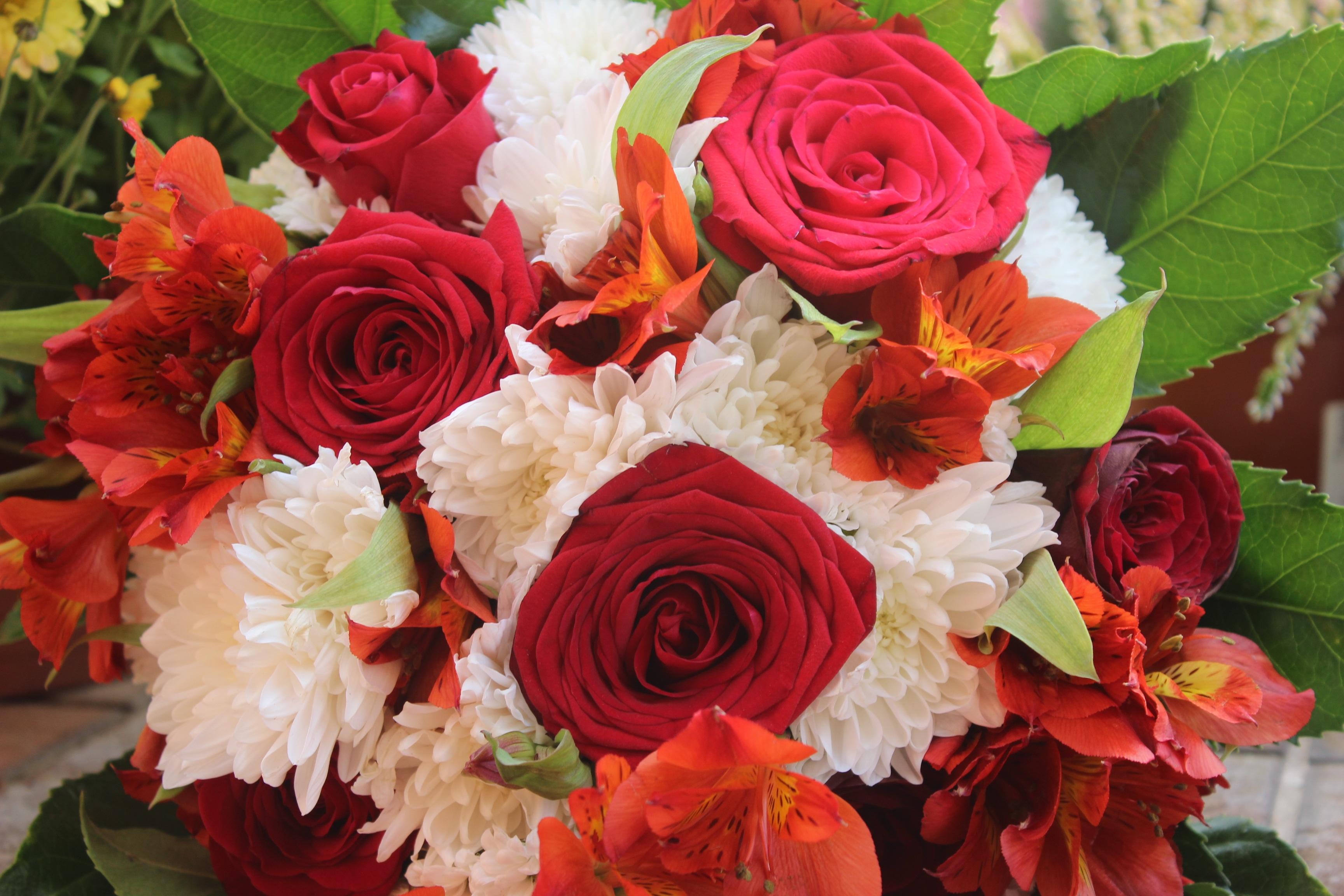 Afskårne Roser gratis billeder : blomst, kronblad, dekoration, rød, roser