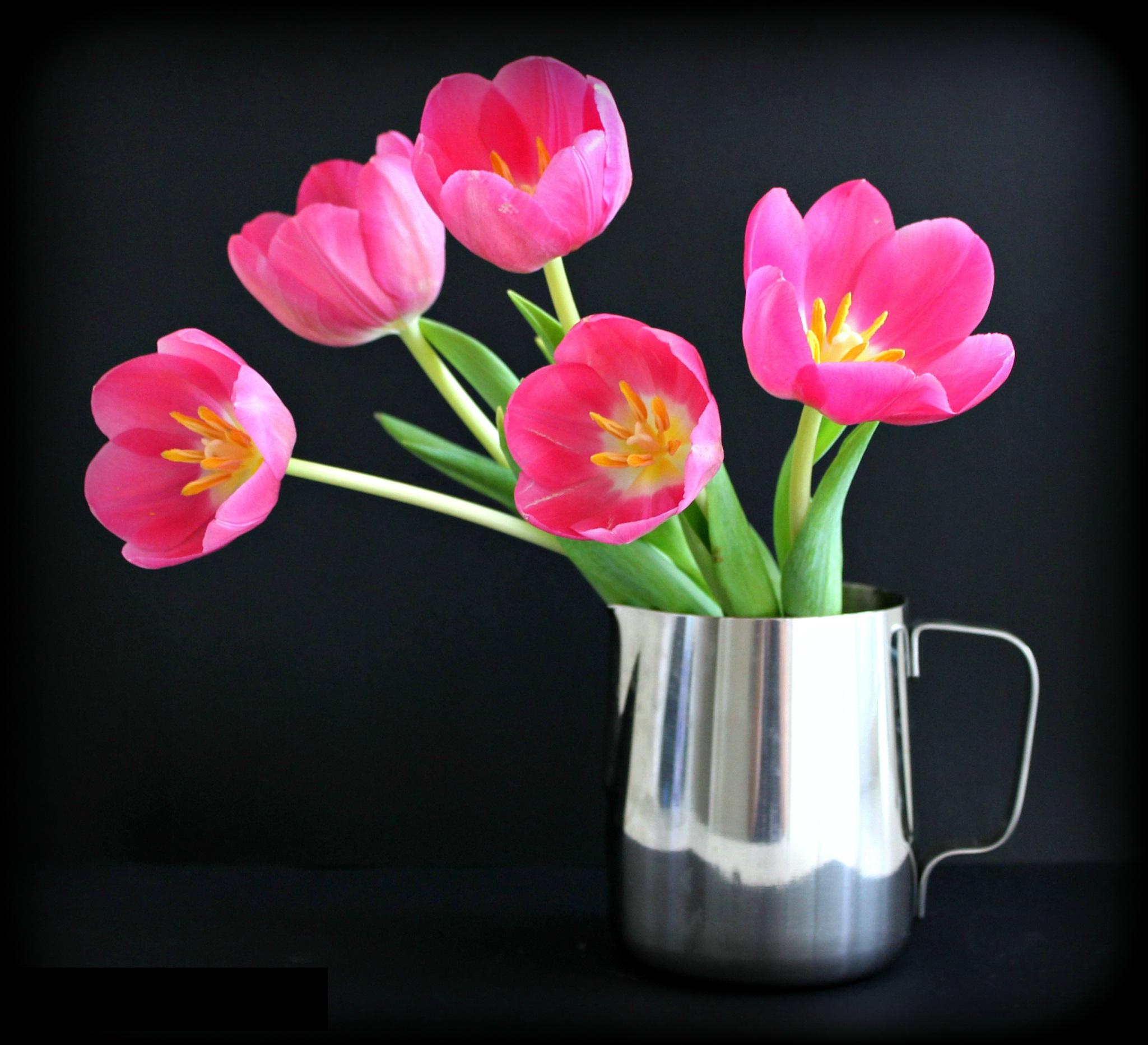 Домашние цветы фото и цвета
