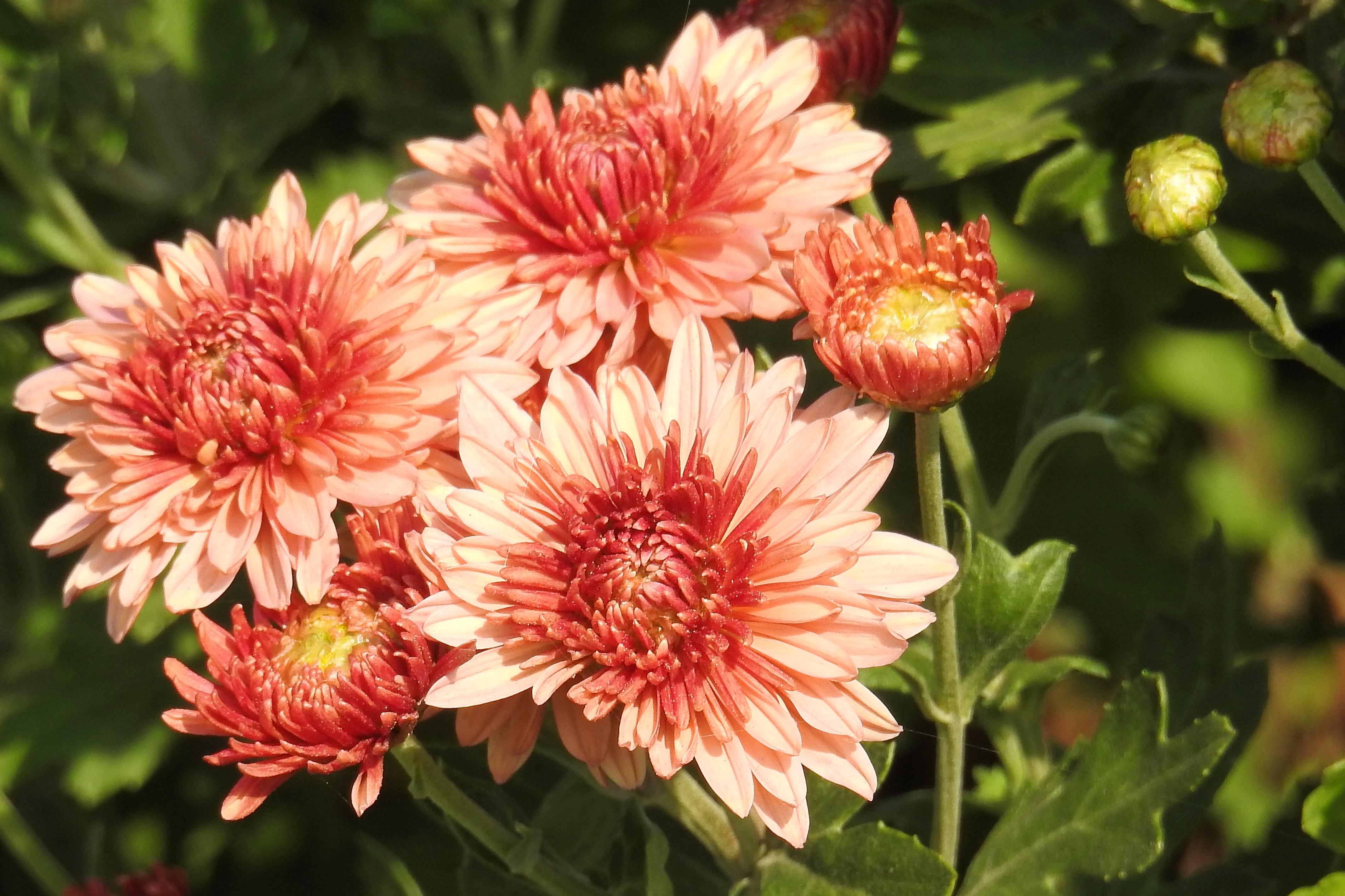 Afbeeldingen Herfstbloemen