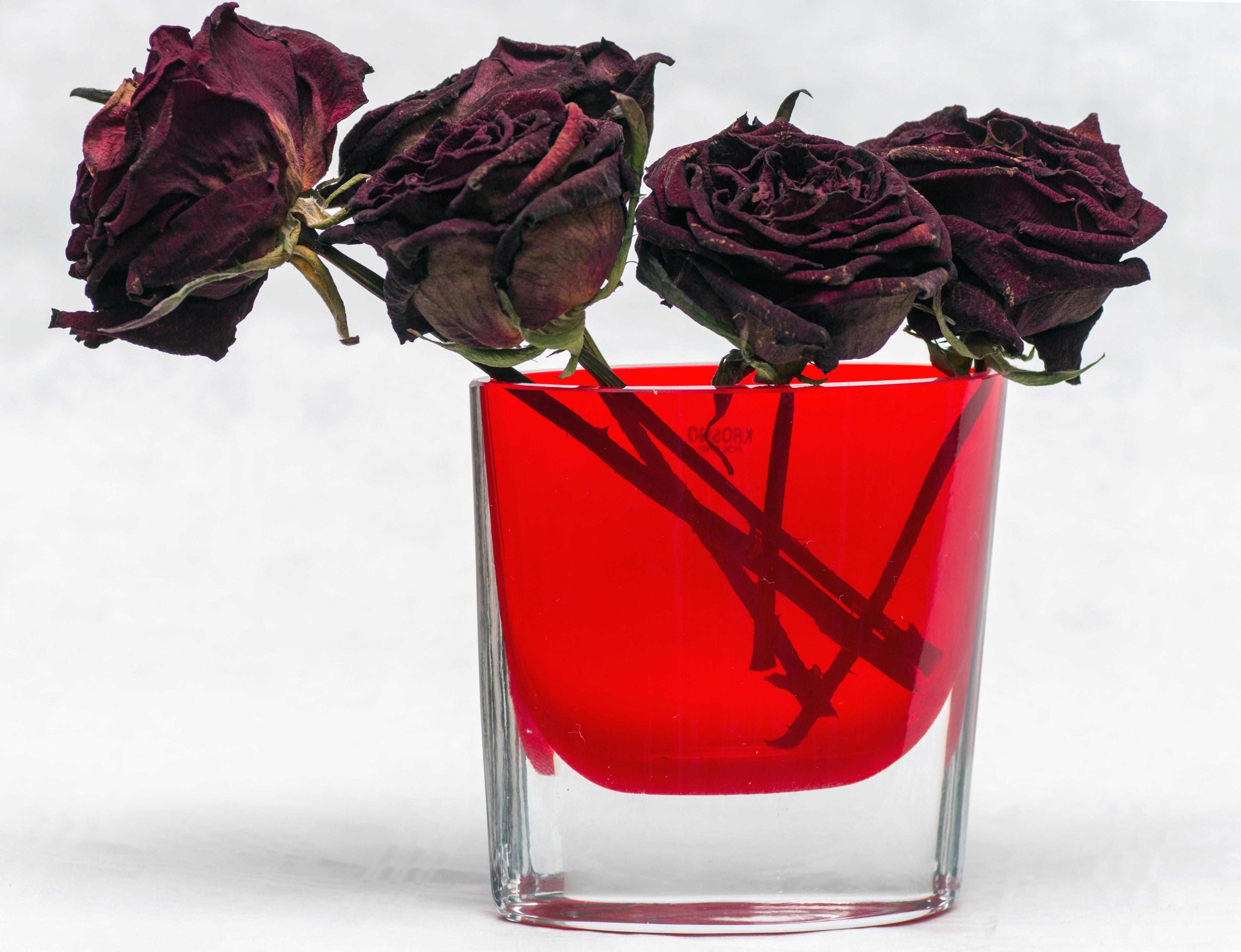 засушенные розы в картинках известно, халка фанаты
