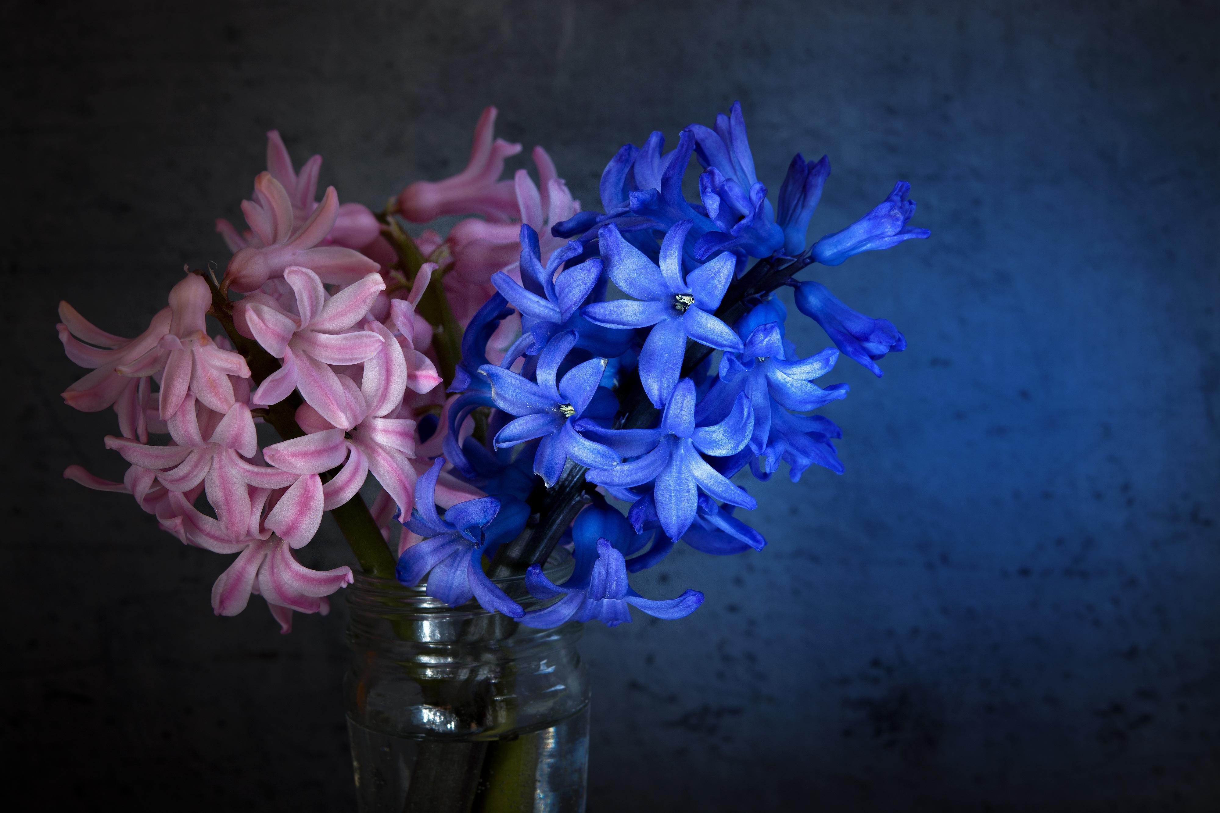 Free Images : petal, glass, vase, blue, pink, close, flora, still ...