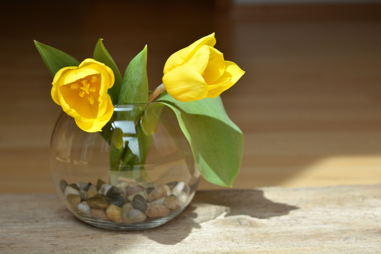 Fotos gratis flor p talo vaso florero produce - Cortar hierba alta ...