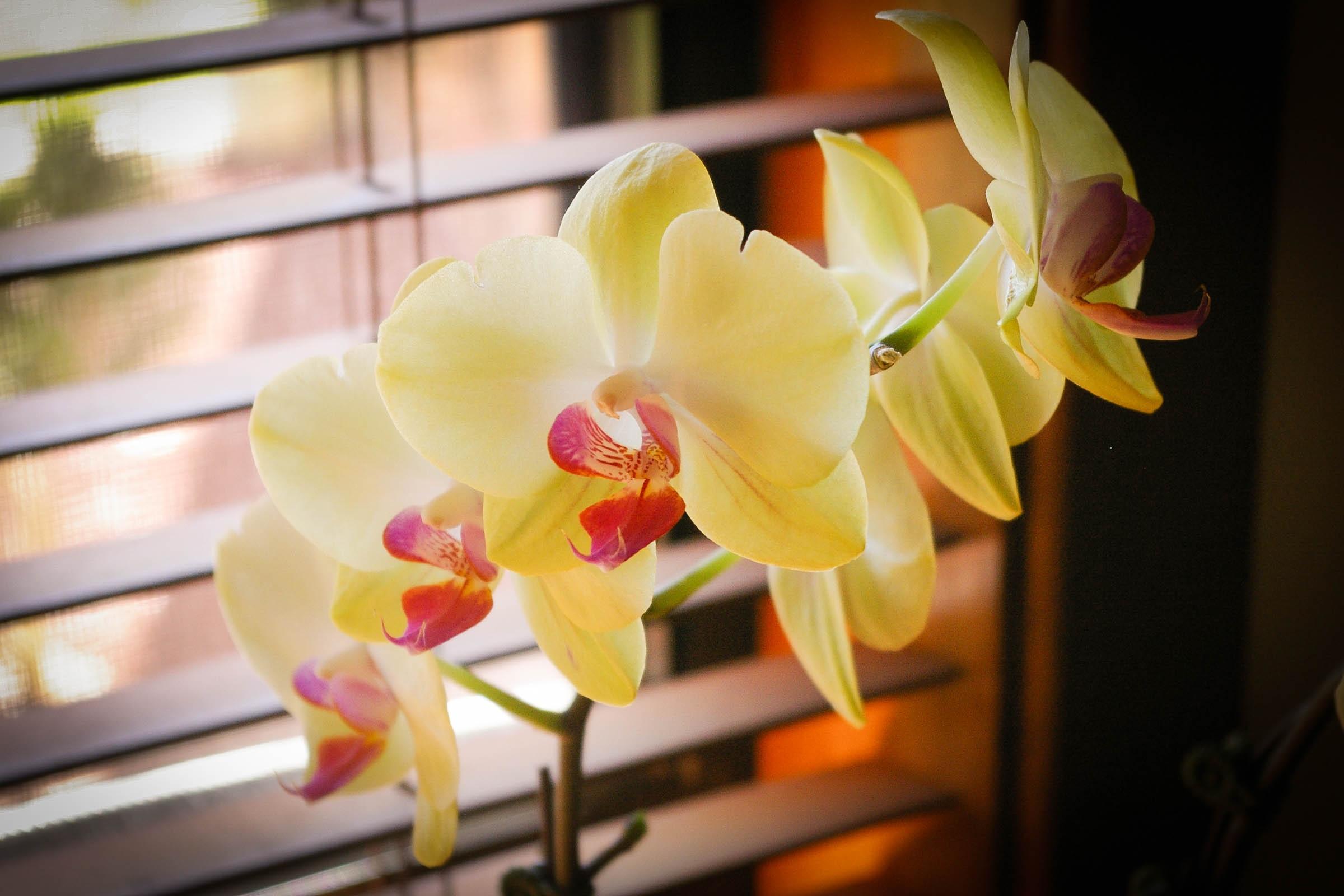 фотографии орхидея зелено желтая фото живем другое