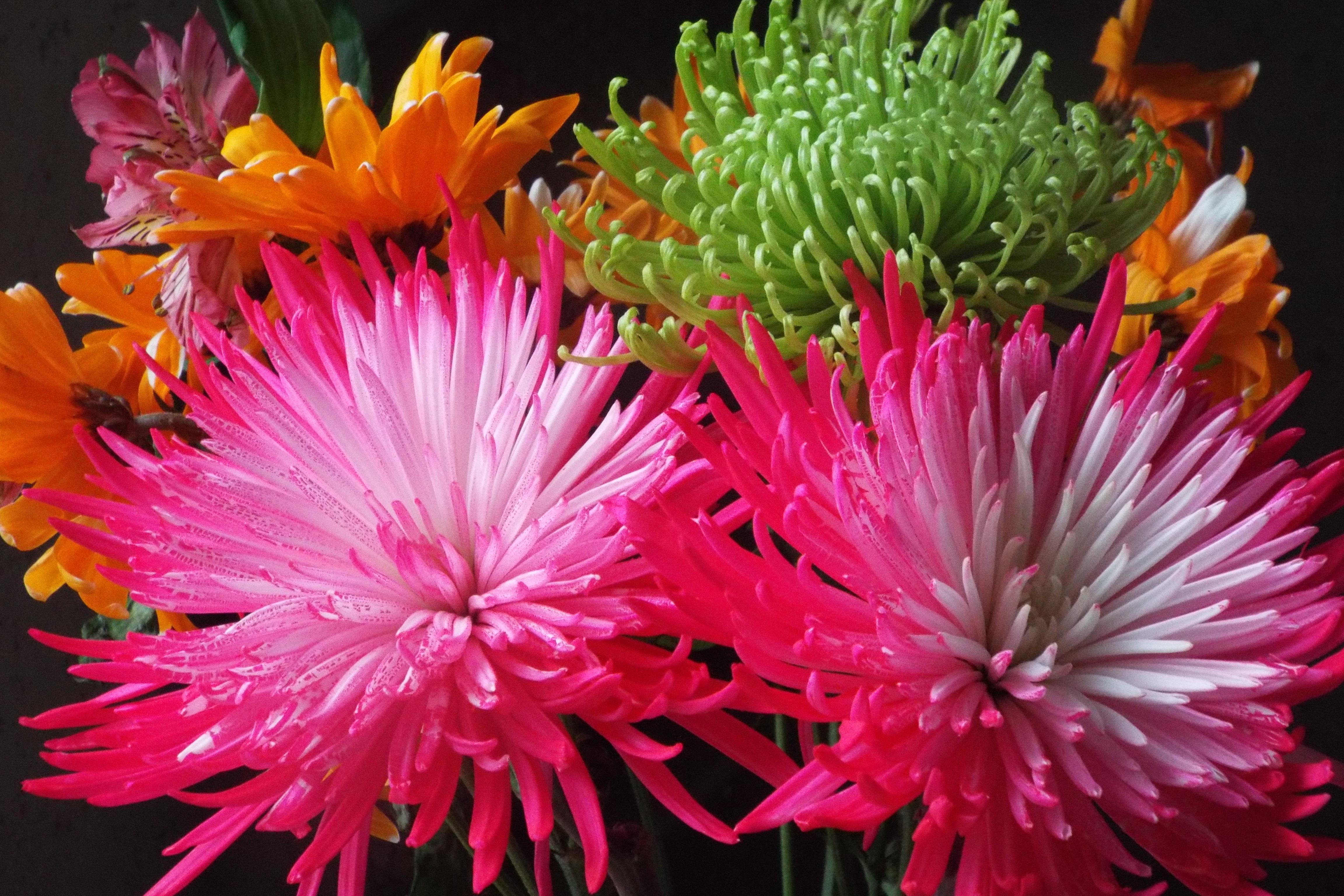 Free Images : petal, green, yellow, pink, flora, flowers, gerbera ...