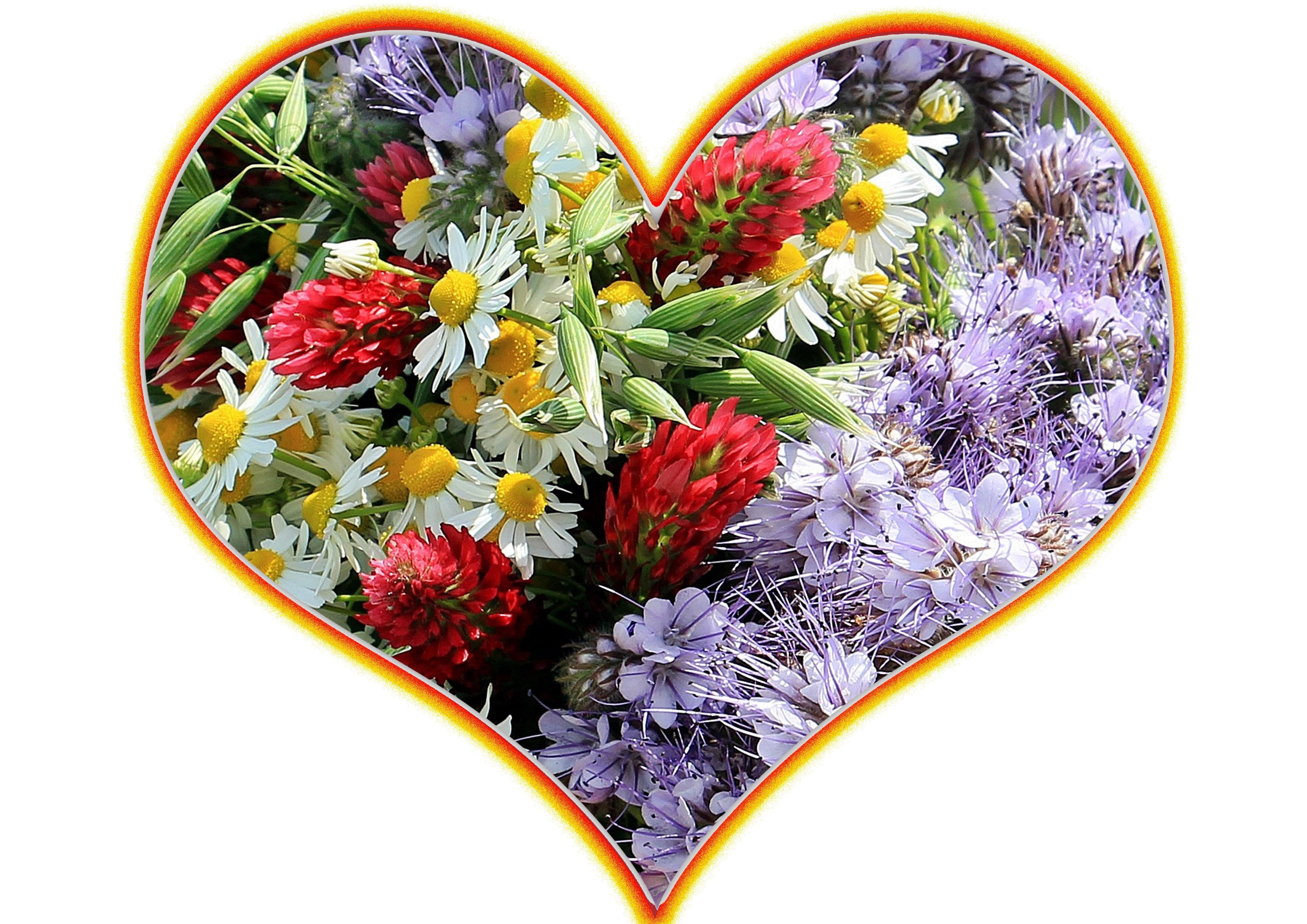 Free Images : petal, love, symbol, color, romance