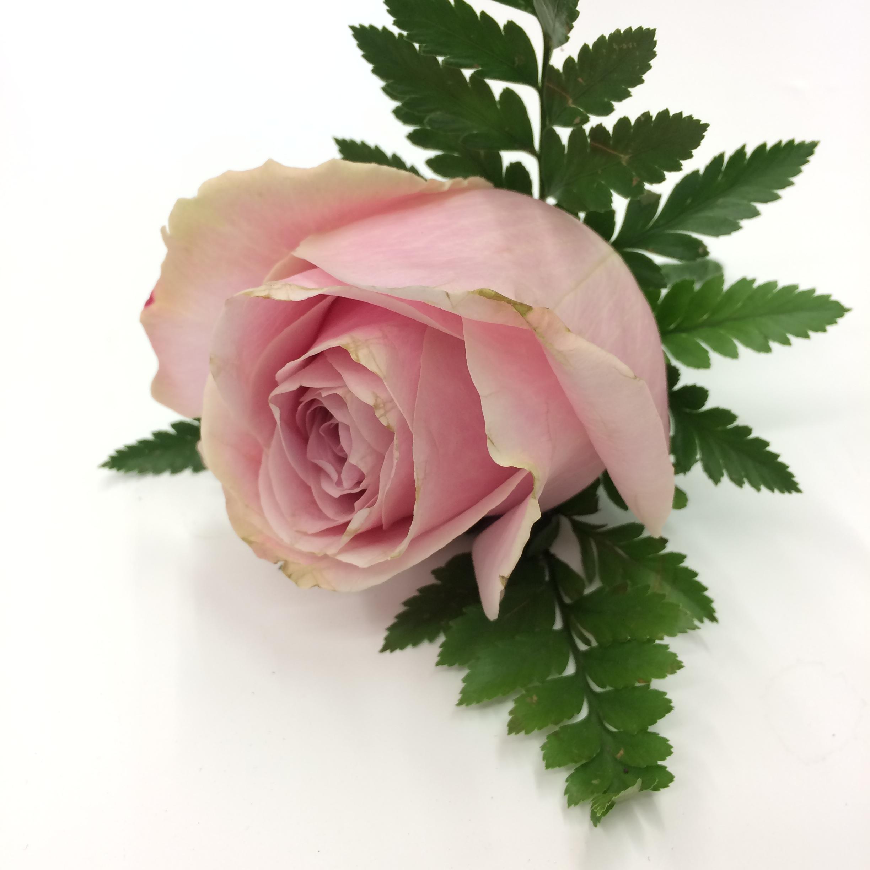 Free Images Petal Love Romantic Pink Wedding Pastel