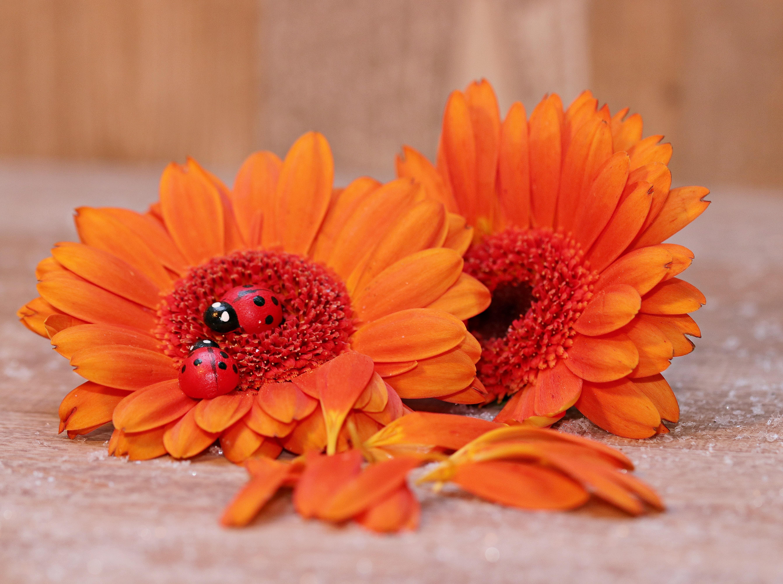 Цветы осень для поздравления фото 501