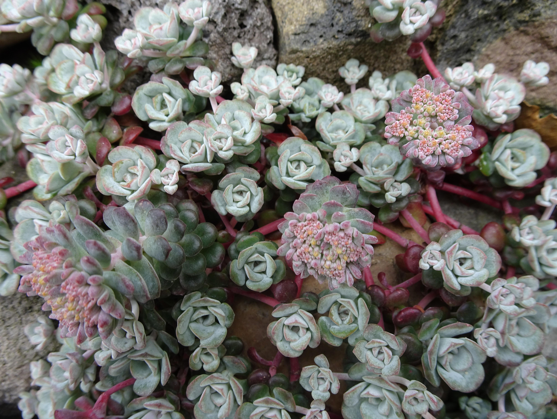 Fotos gratis : flor, pétalo, patrón, jardín, flora, fondo ...