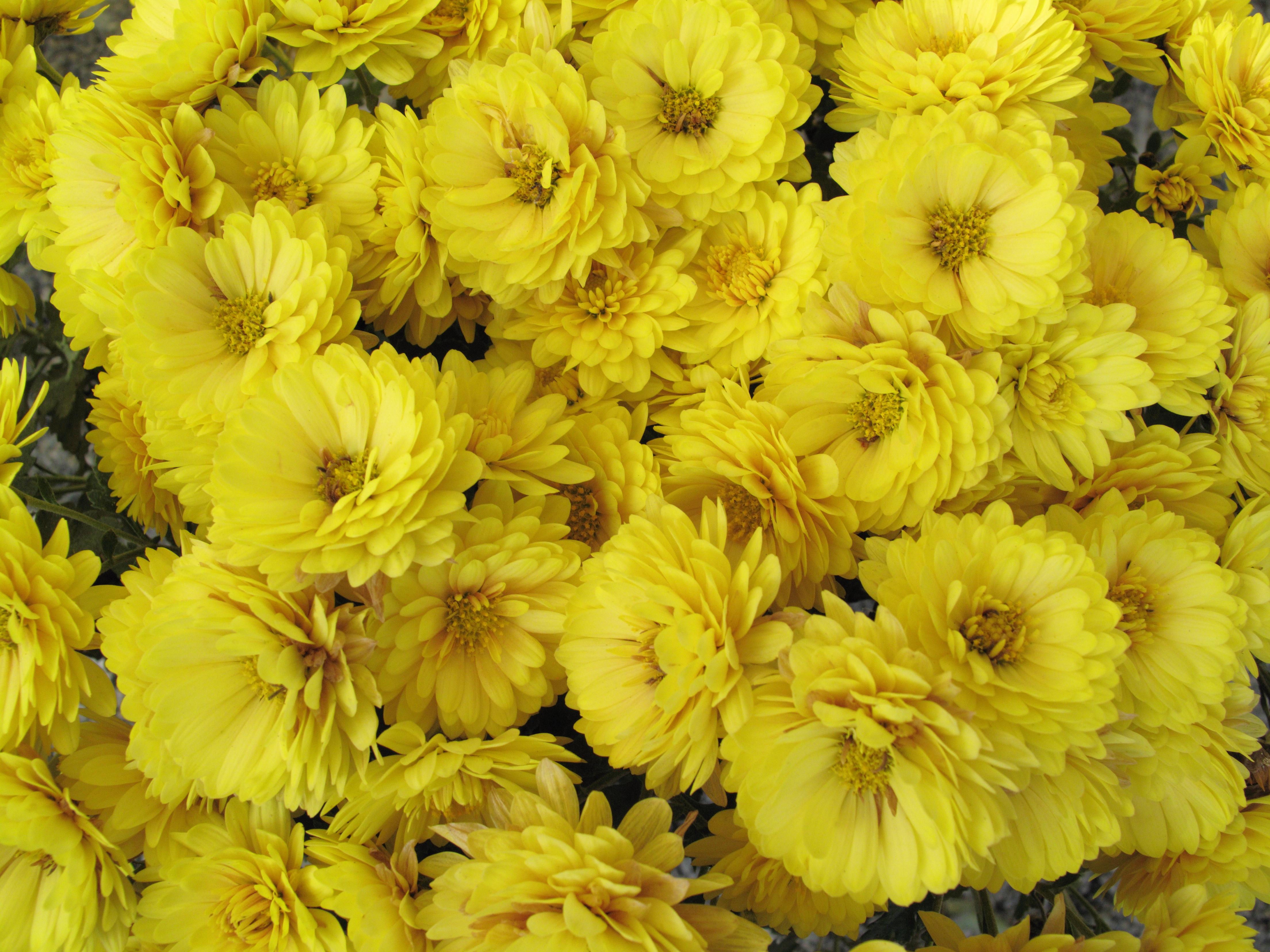 Free Images Flower Petal Pattern High Yellow Flora Cool