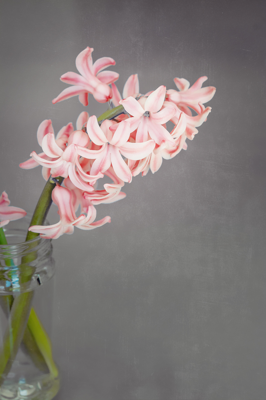 Free Images Petal Pink Close Flora Still Life Art Floristry