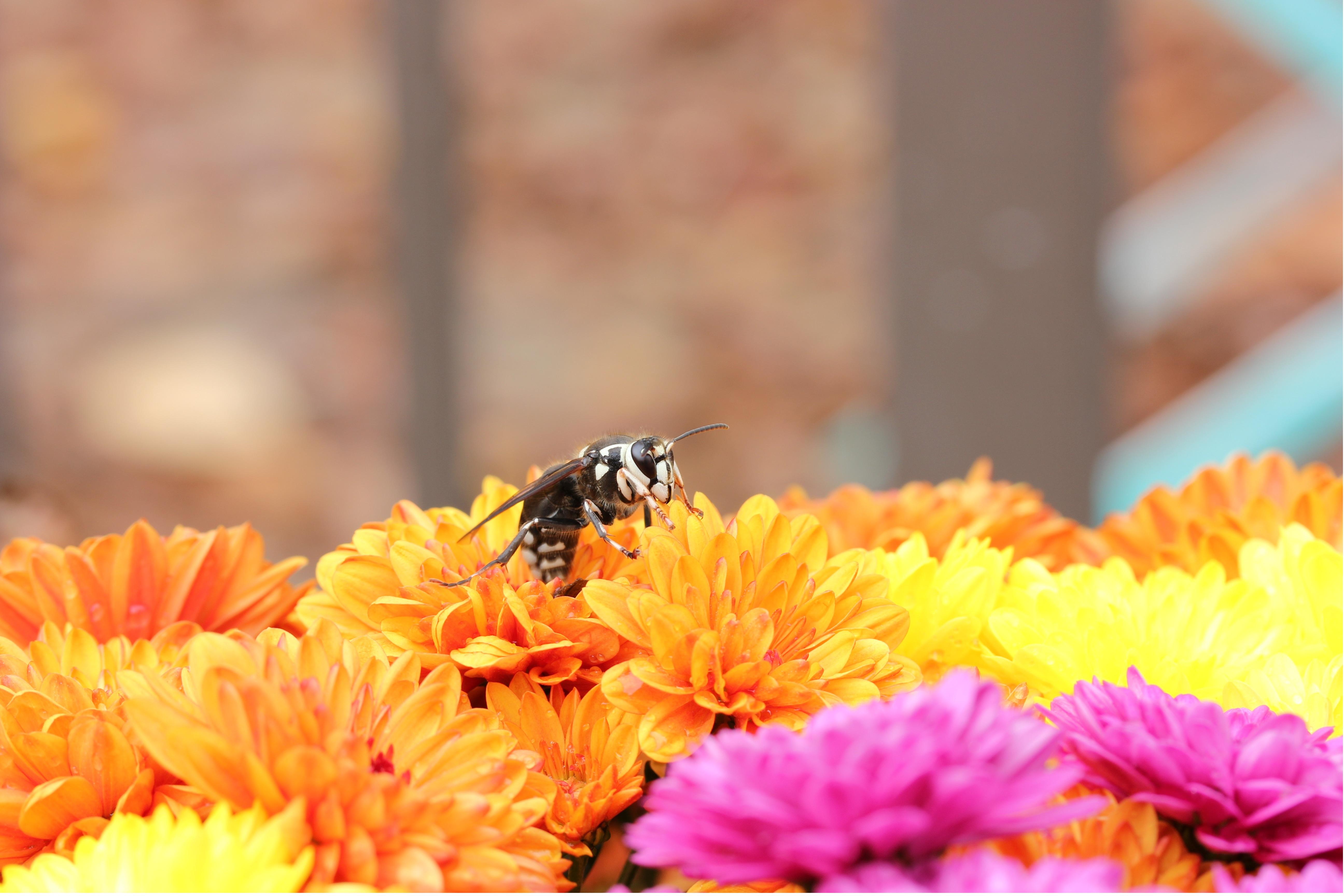 Bienenblumen