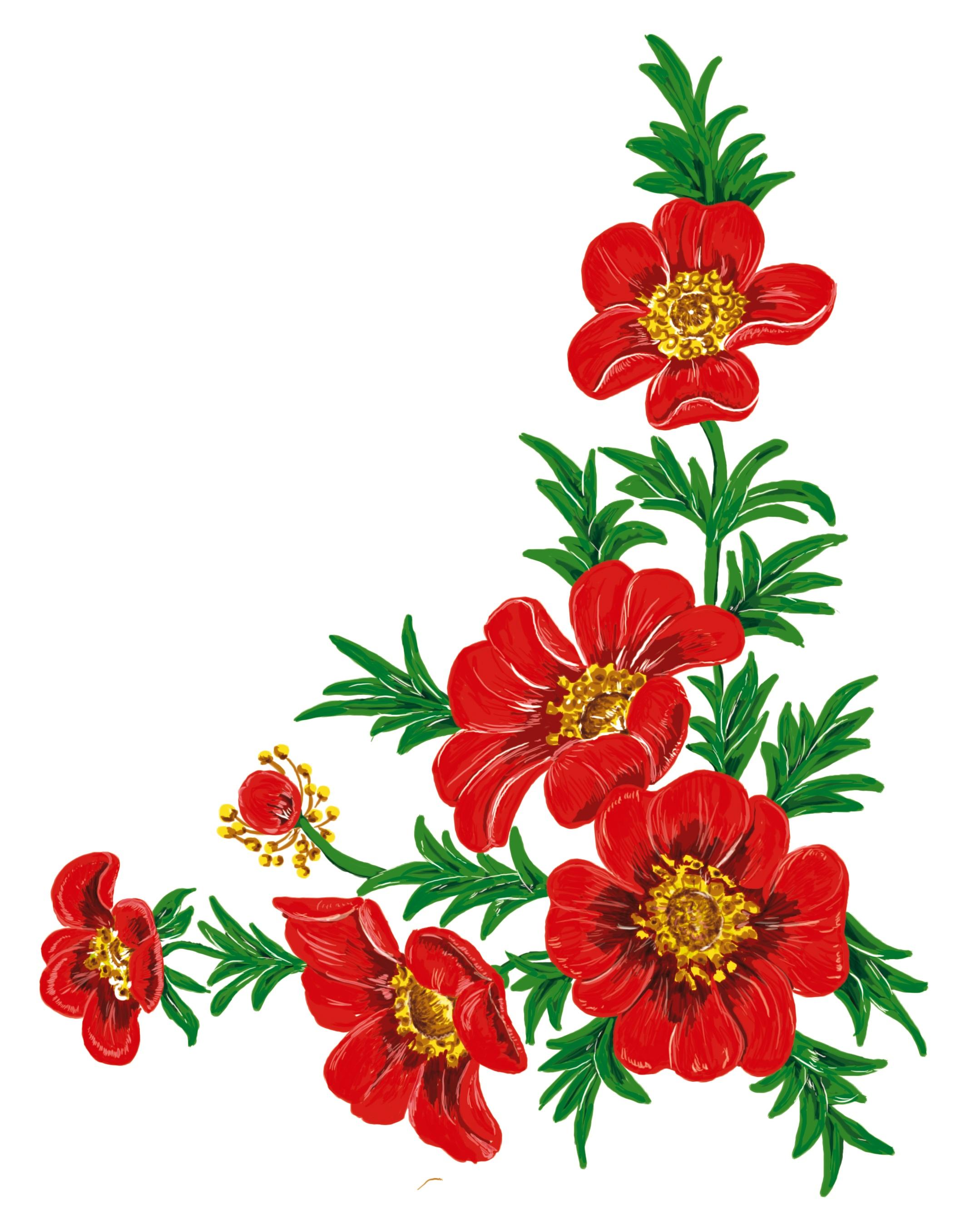 Fotoğraf çiçek Taçyaprağı Kırmızı Boyama Illüstrasyon Gerbera