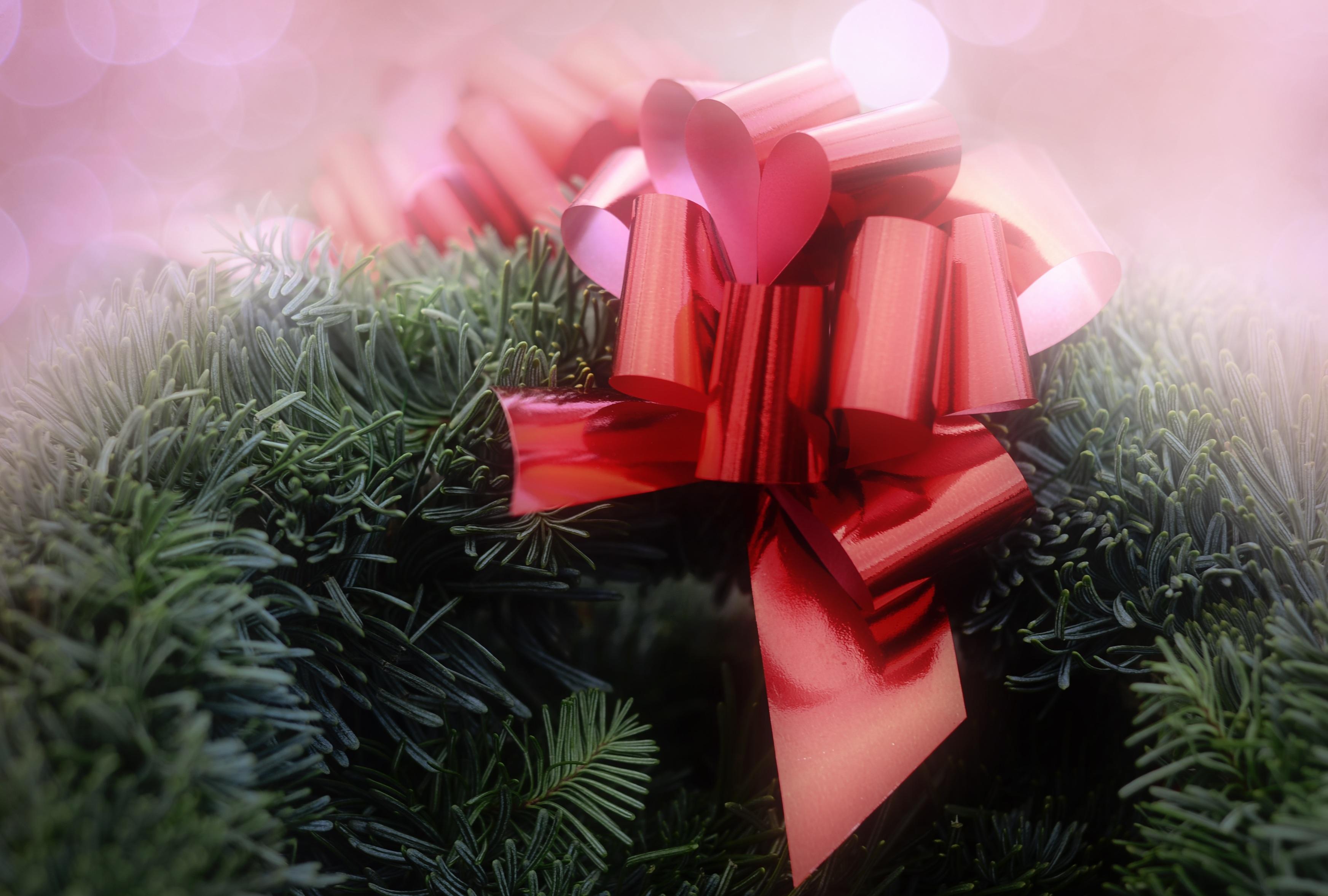 fotos gratis flor ptalo rojo rosado rbol de navidad corona de navidad decoracin navidea borde arco floristera rboles de hoja perenne