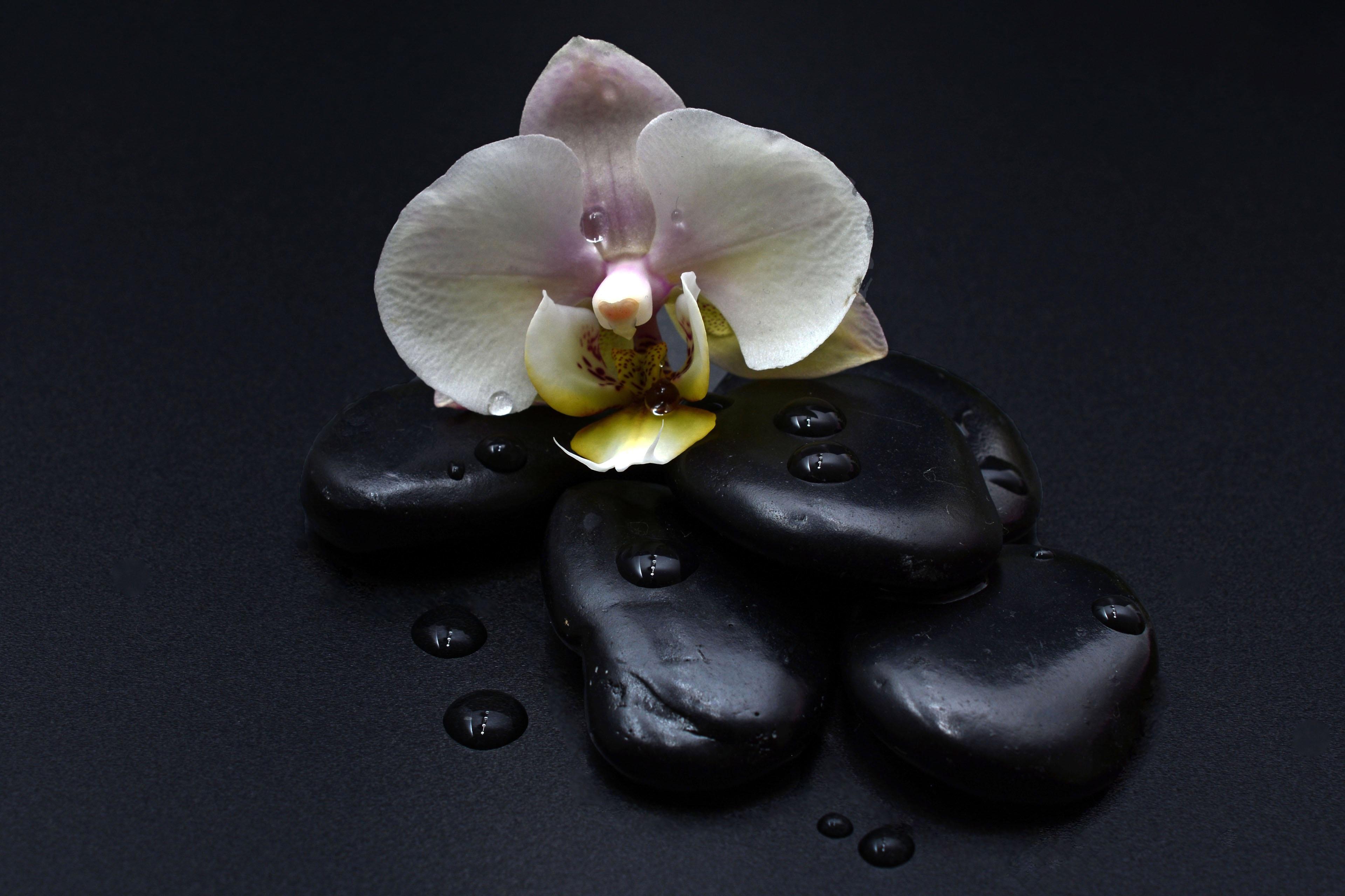 Free Images : plant, petal, relax, balance, black, close ...