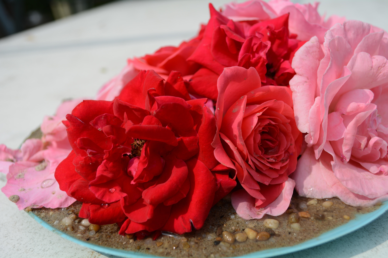 무료 이미지 : 꽃잎, 장미 꽃, 식품, 빨간, 담홍색, 디저트, 케이크 ...