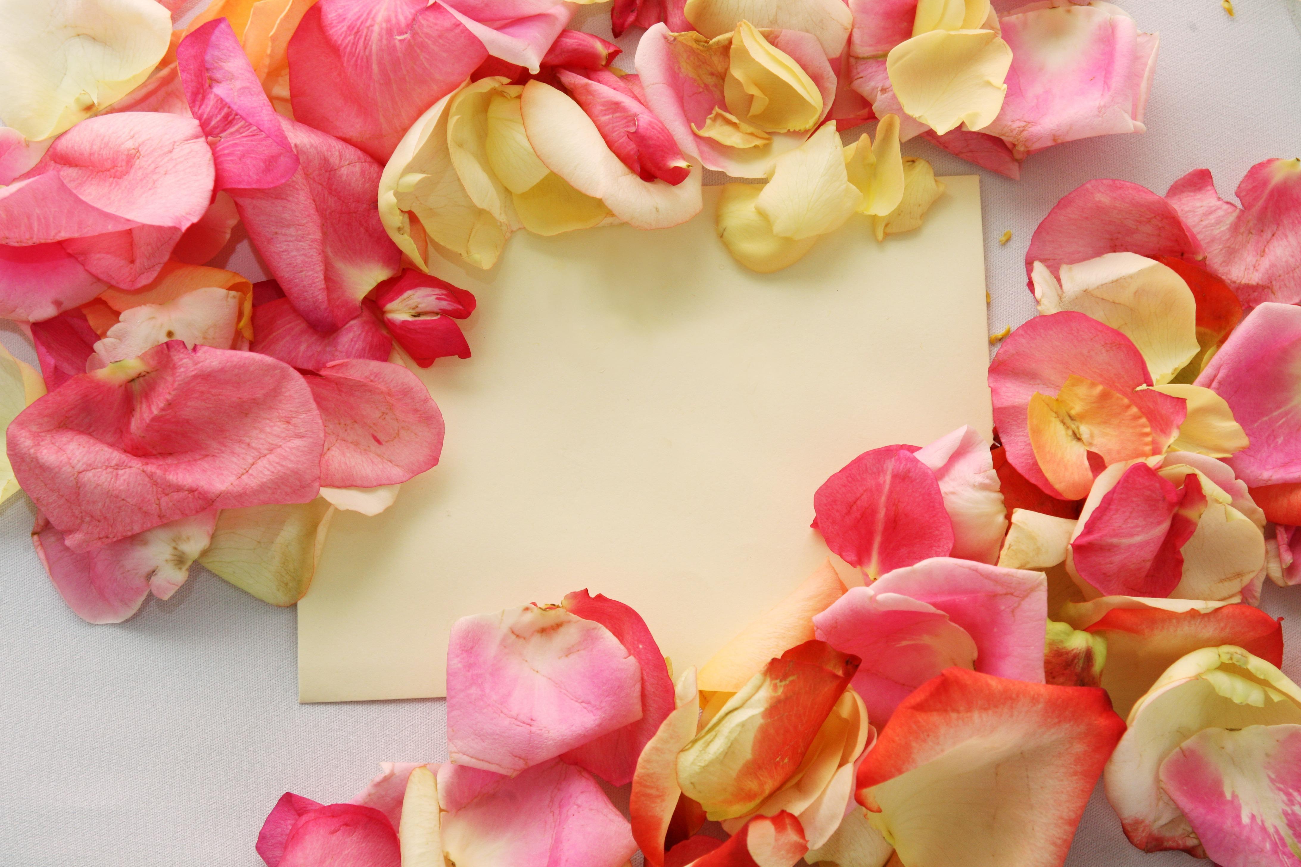 Беременной девушки, картинки с лепестками роз на столе