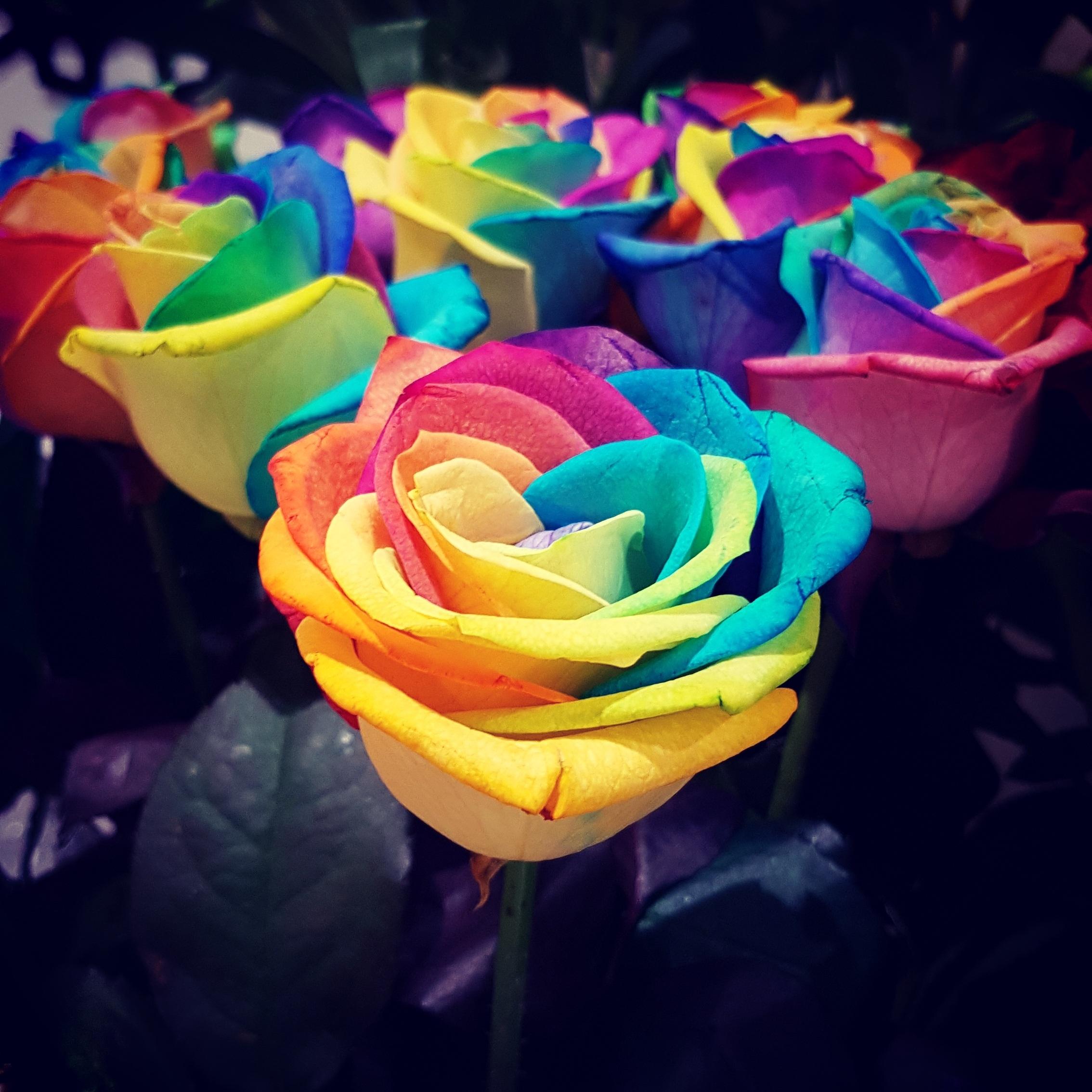 Цветок волжанка фото