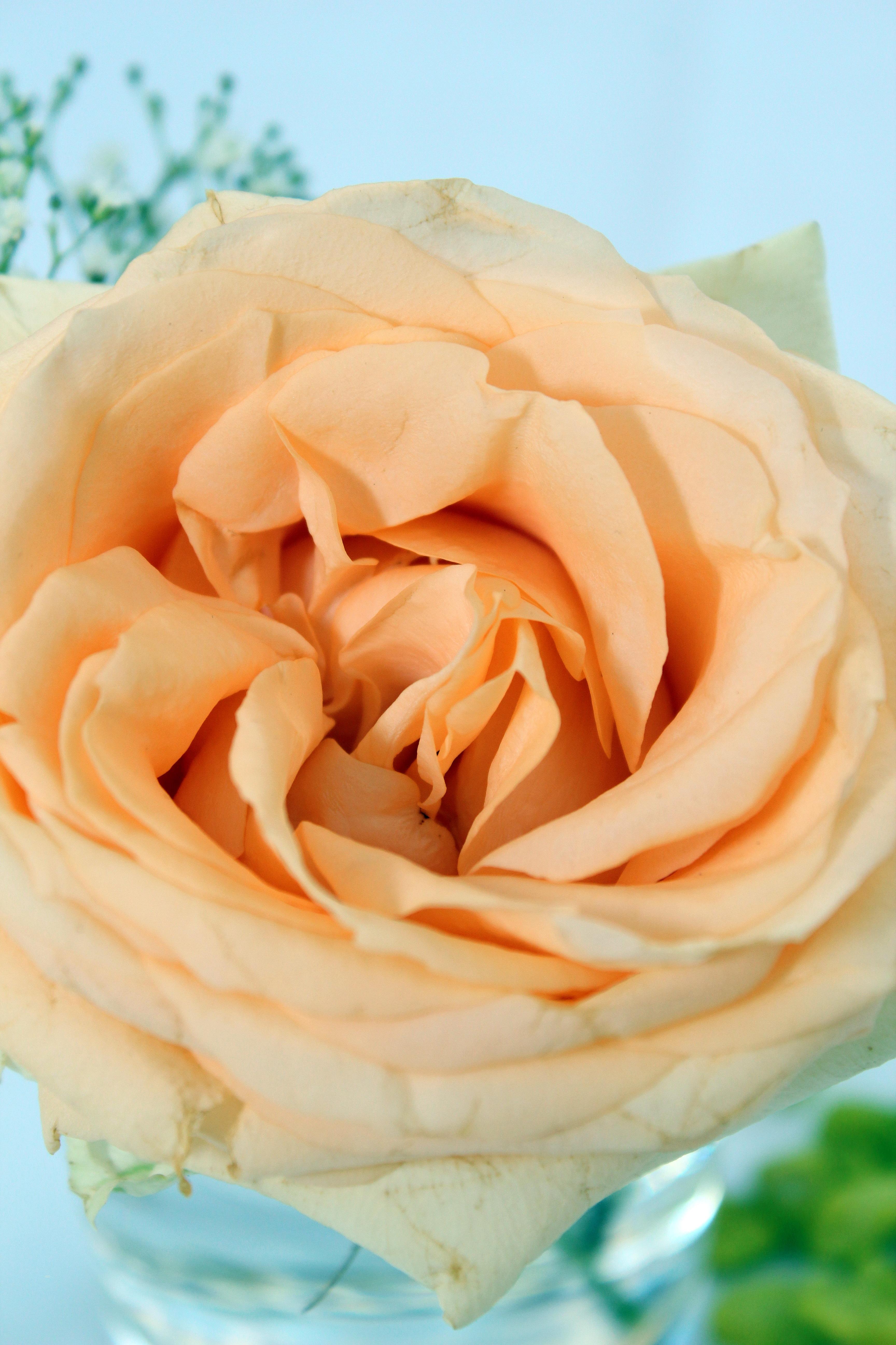 Free Images Petal Orange Food Yellow Pink Flowers Close Up