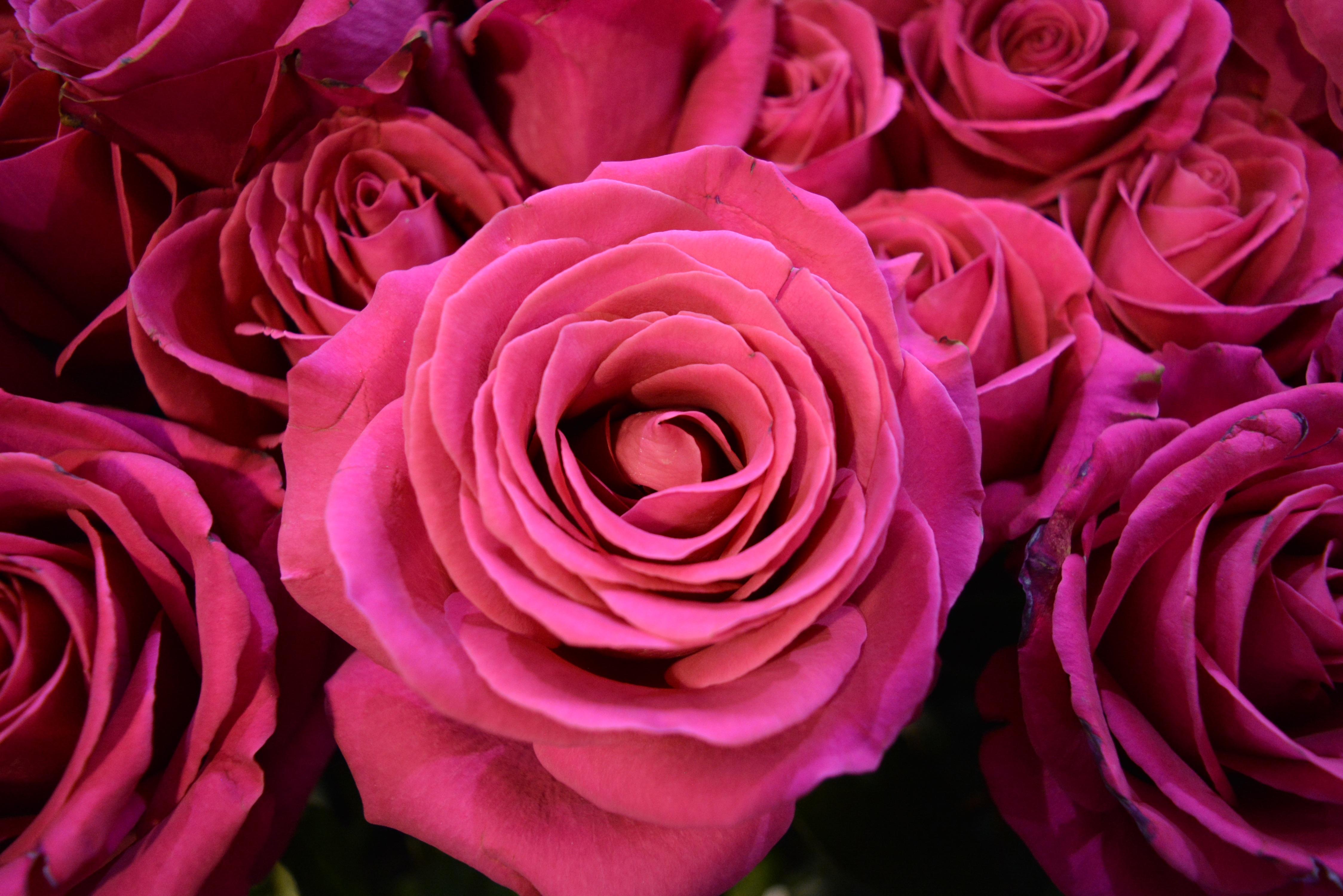 Живые картинки цветы фото